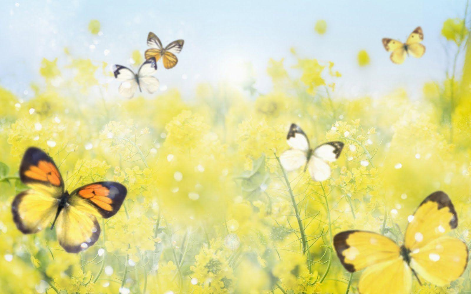 Butterfly Wallpapers 45
