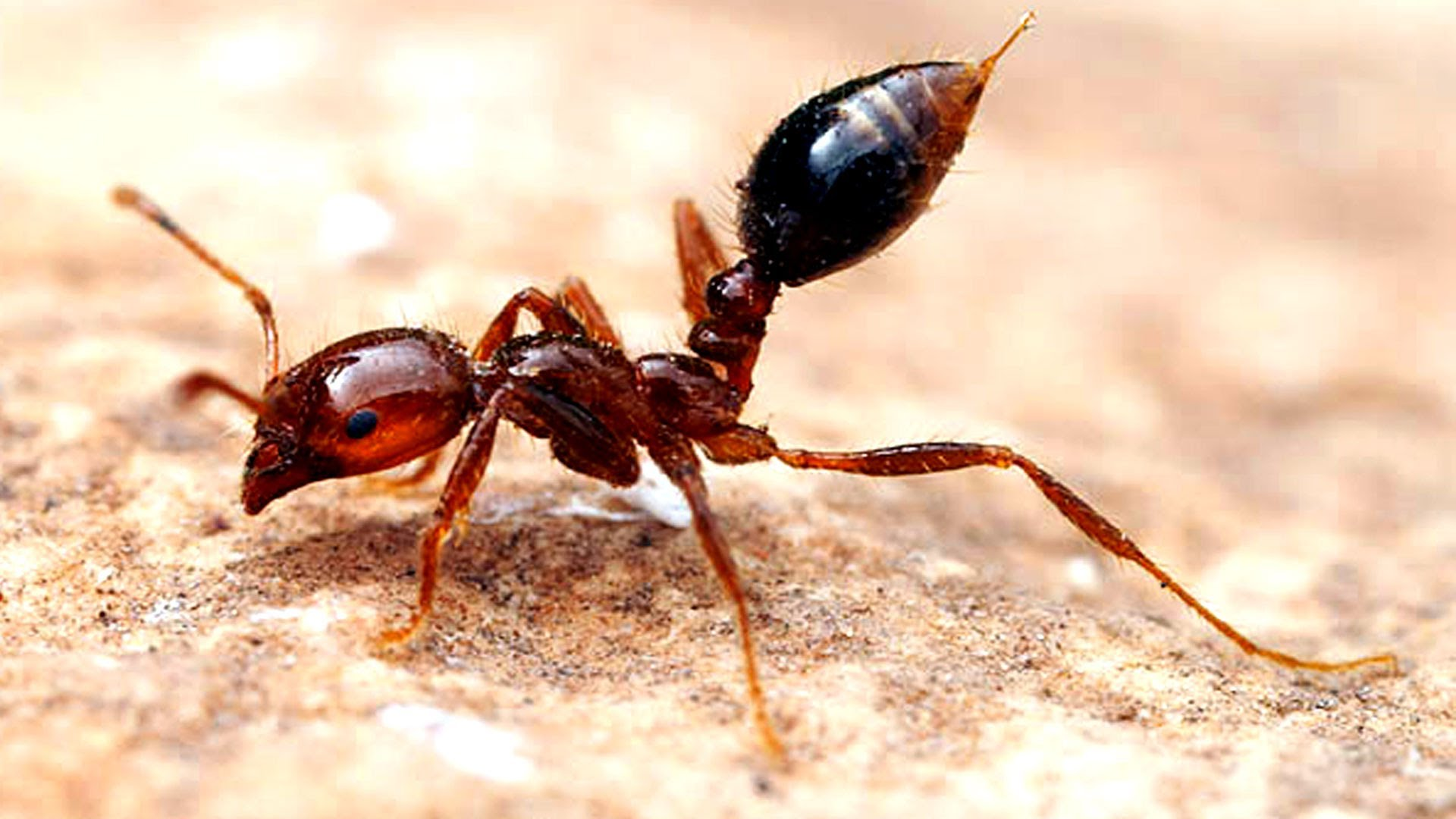 4K Ants Wallpapers High Quality