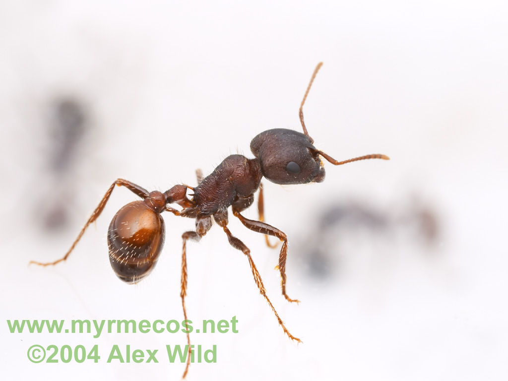 Ant Wallpapers...