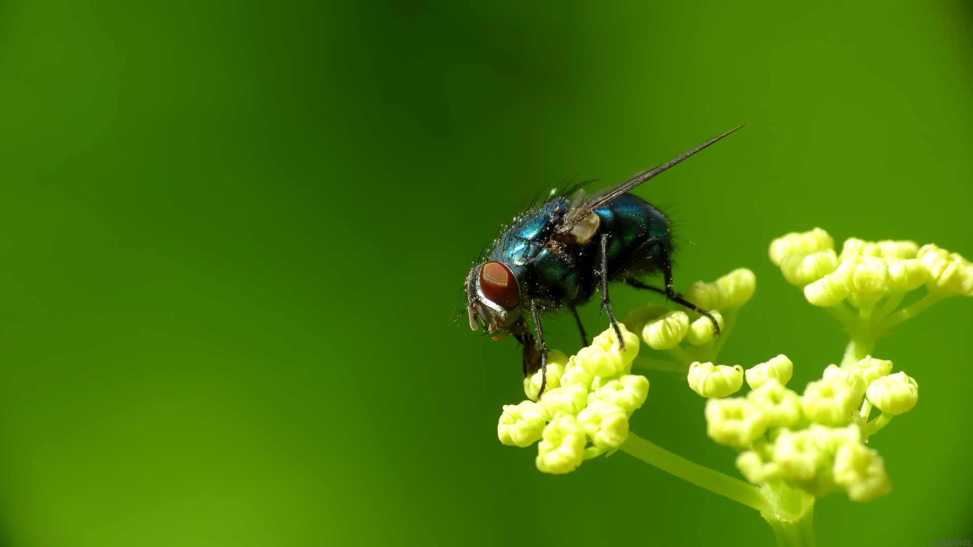 Fly HD Wallpapers