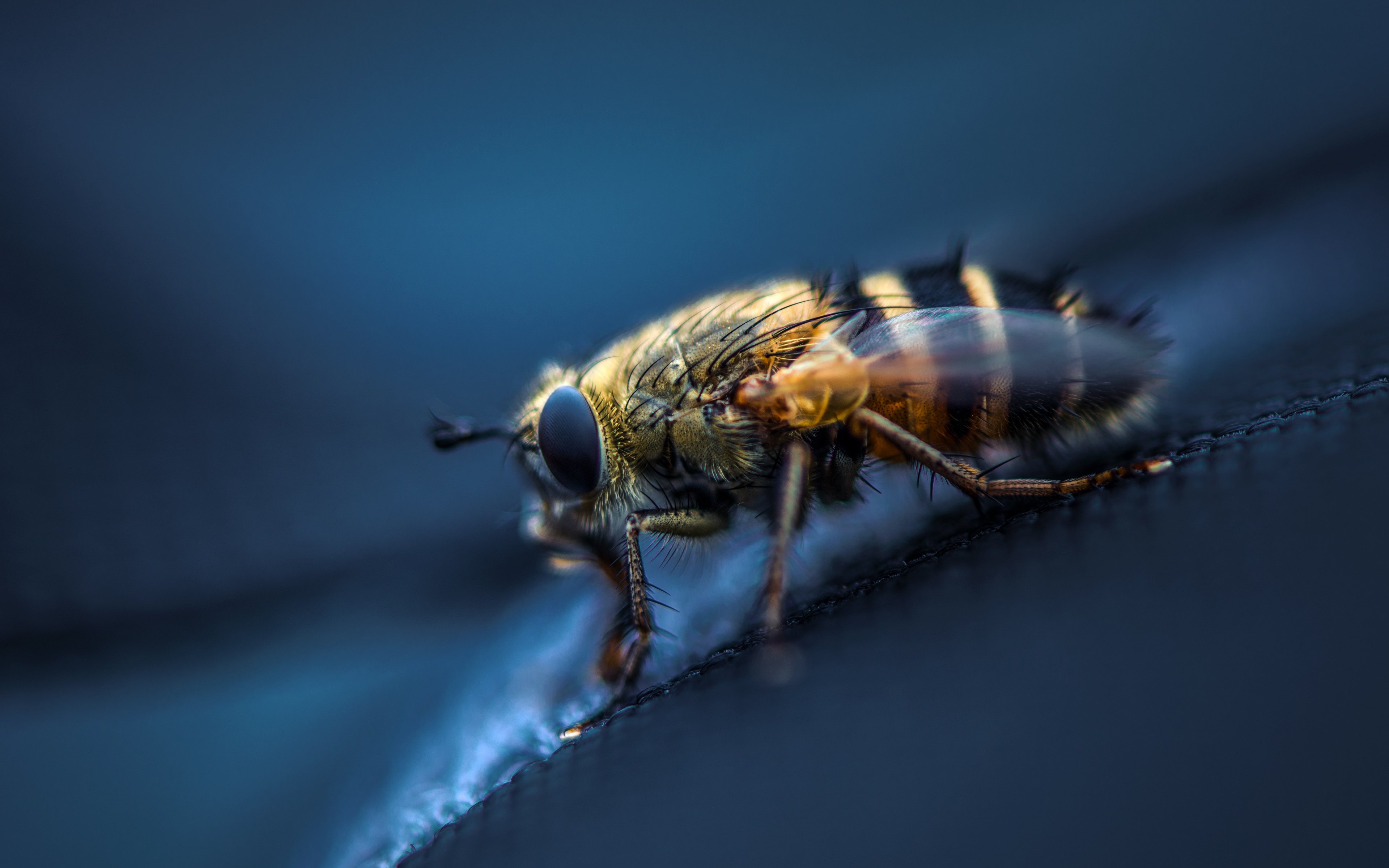 Download wallpapers 3840x2400 fly, insect, macro, eyes, wings