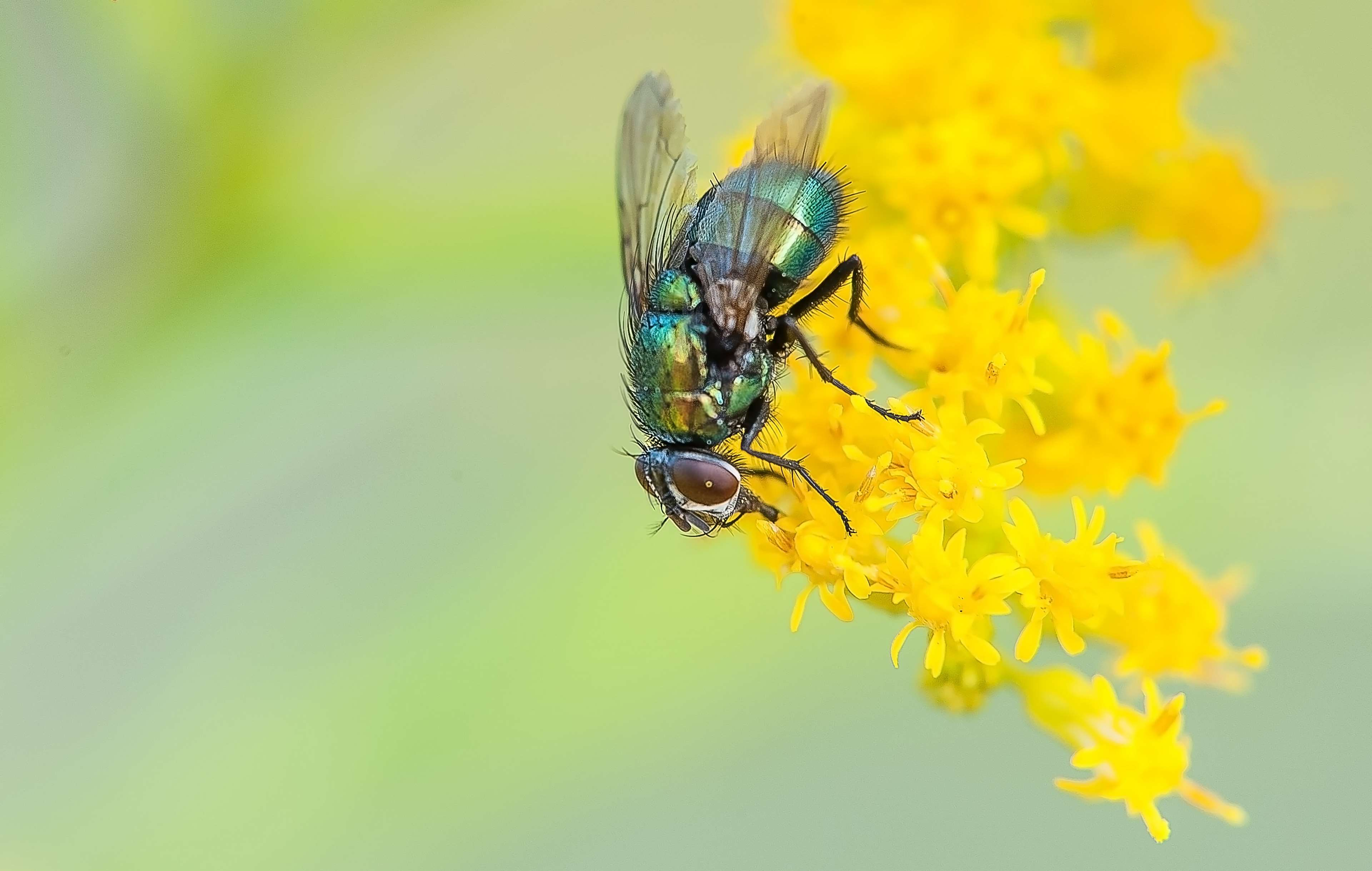 bug, fly, insect, nature, summer 4k wallpapers and backgrounds