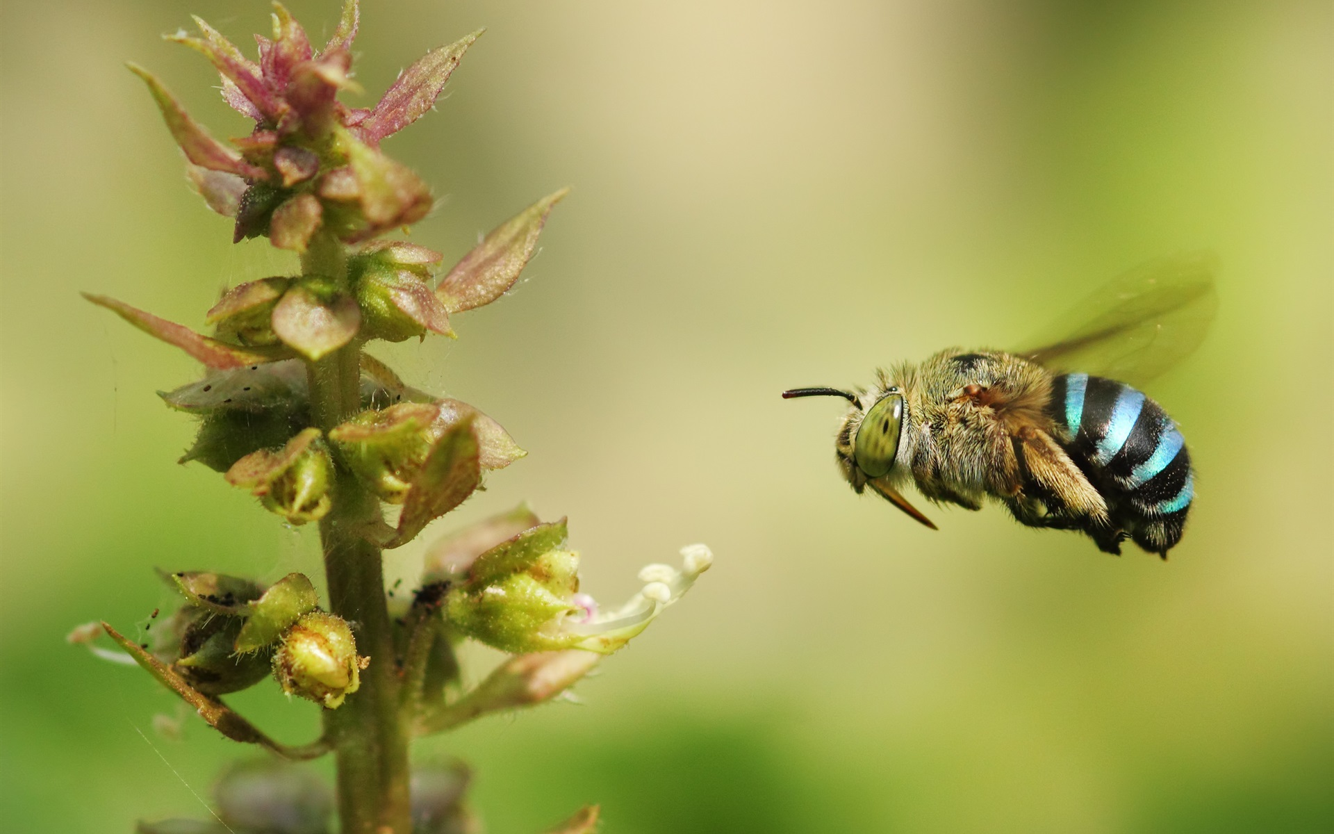 Wallpapers Bumblebee flying, insect close