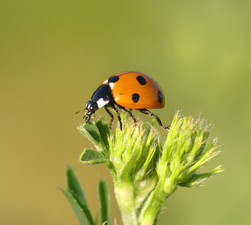 500+ Insect Pictures [HD]