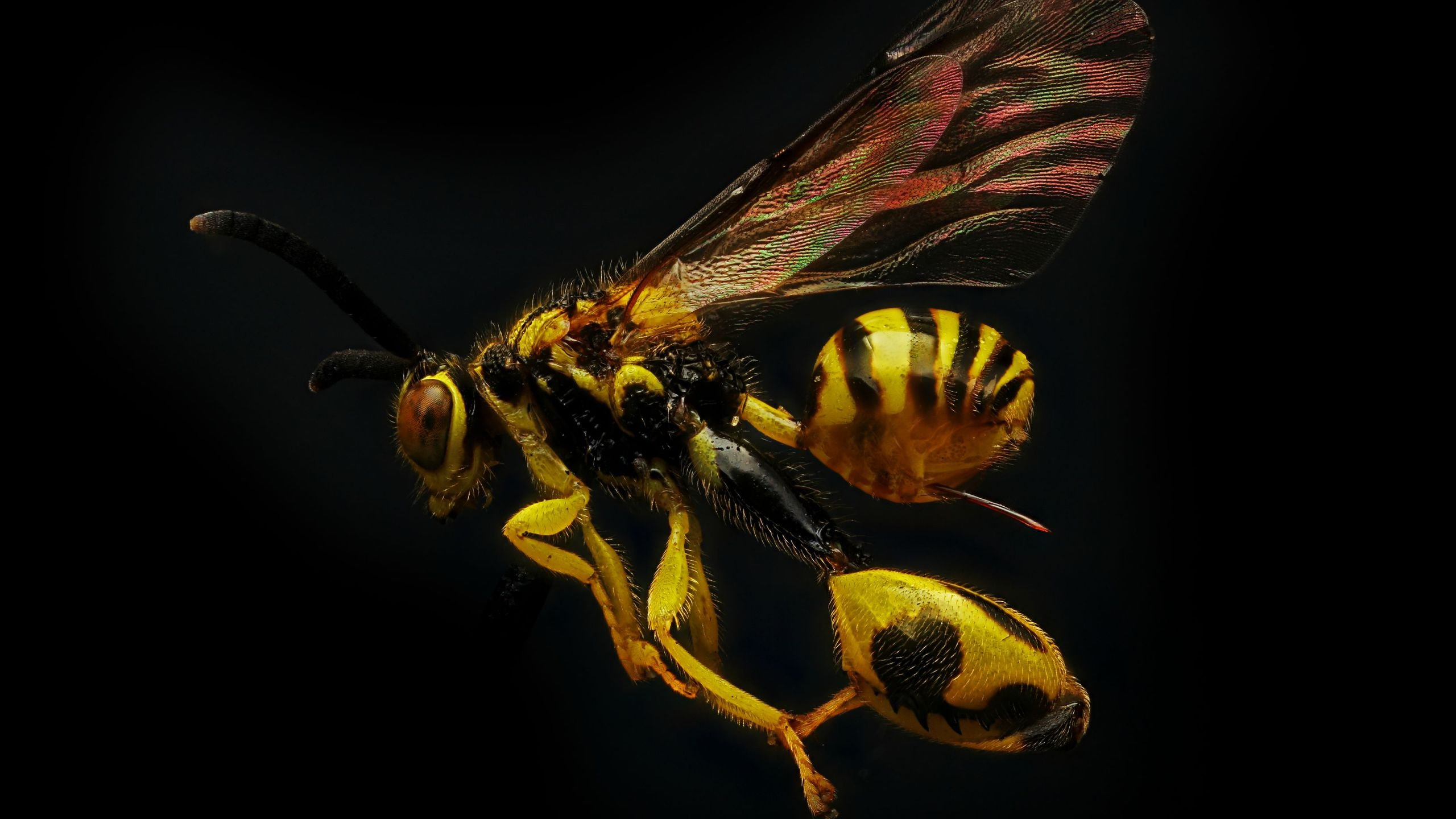 wasp 4K wallpapers for your desktop or mobile screen free