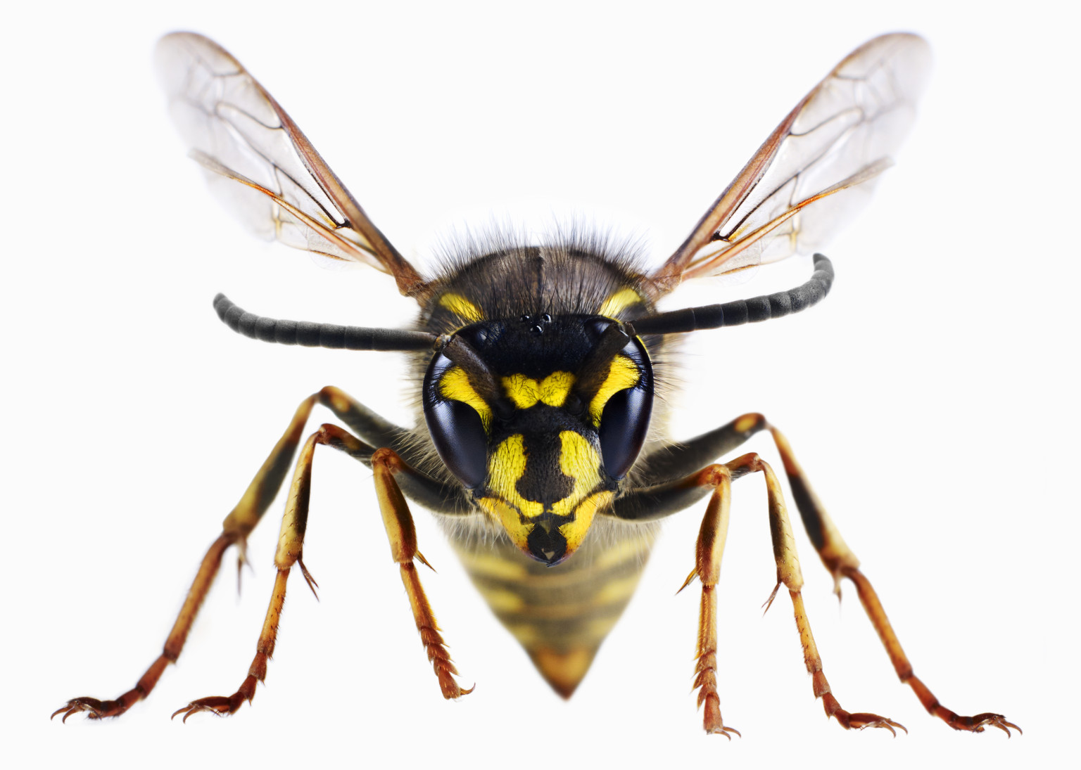 36+ Best HD Wasp Wallpapers