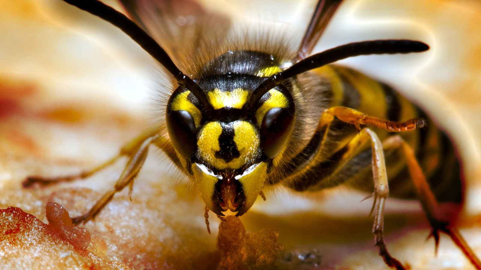 What's the Difference Between a Hornet and a Wasp