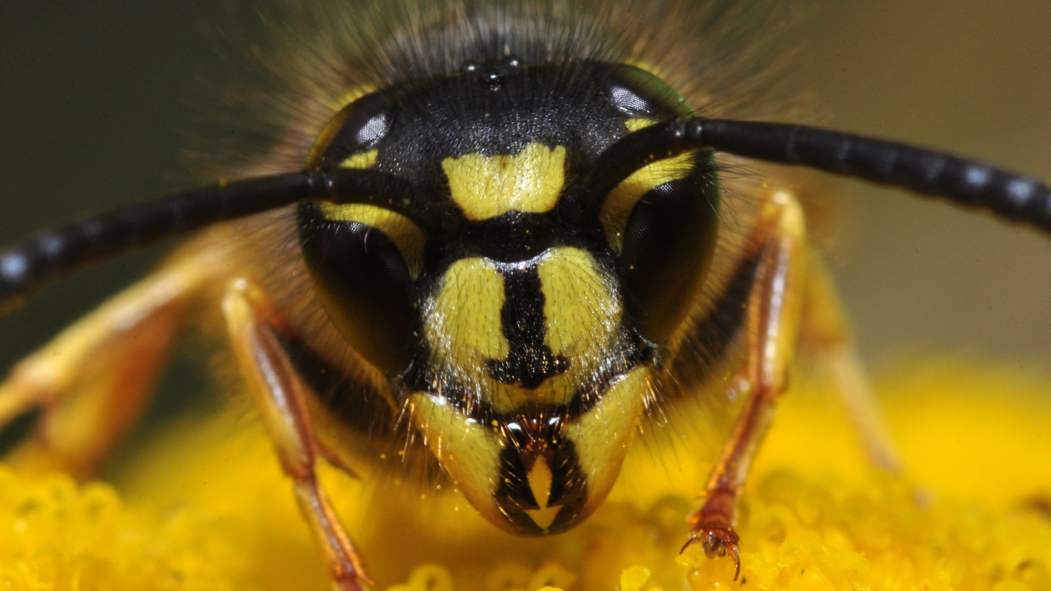 What's the difference between wasps, bees and hornets