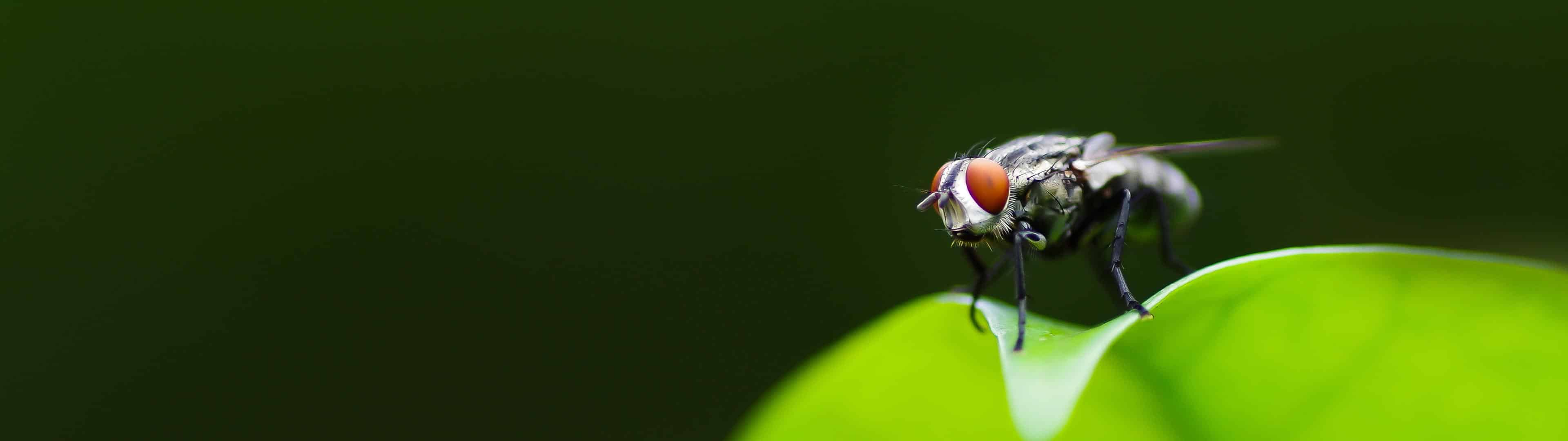 Housefly Dual Monitor Wallpapers