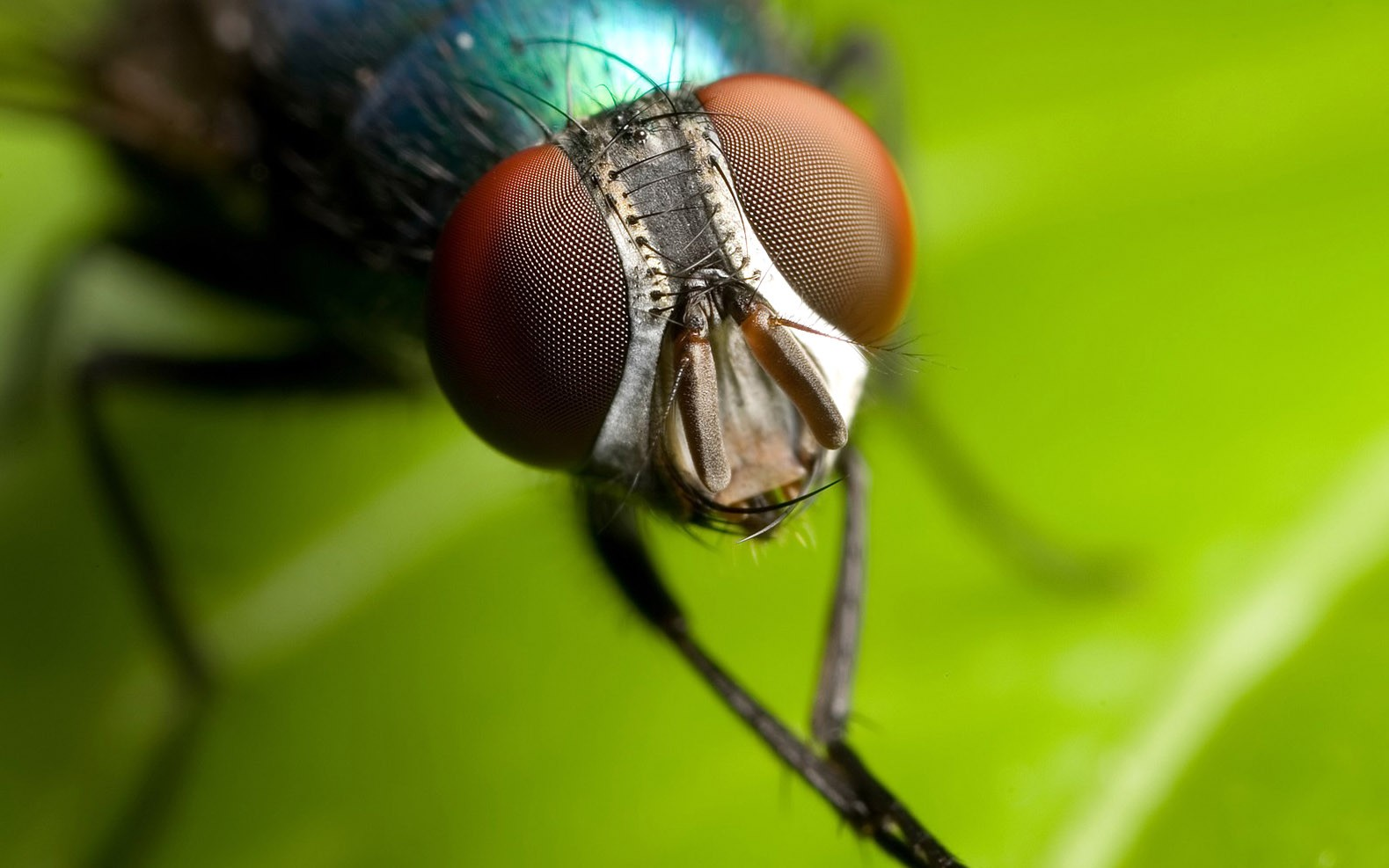 House, Fly, HD Animal Wallpapers, Cool Animals, Widescreen