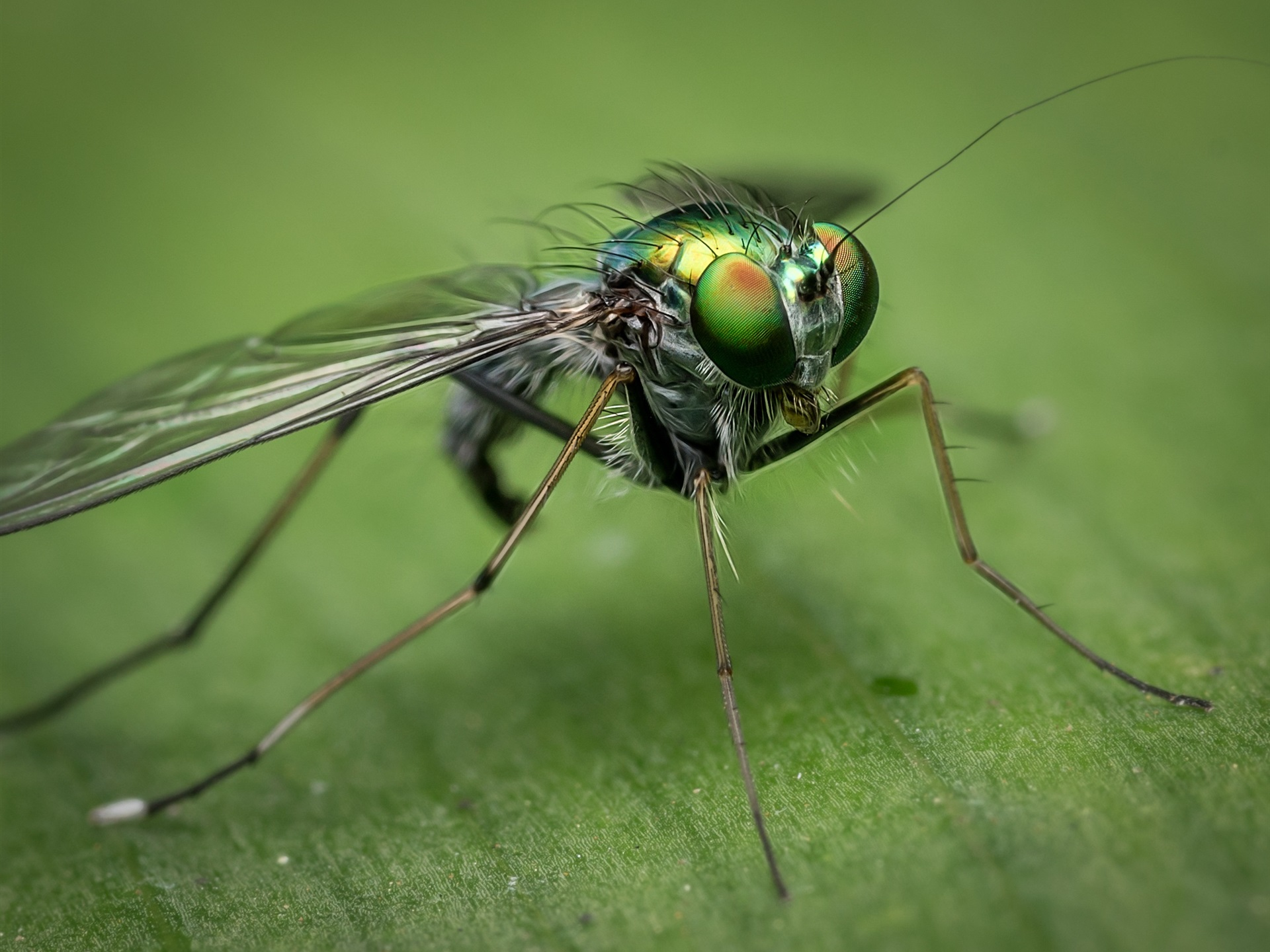 Wallpapers Insect close