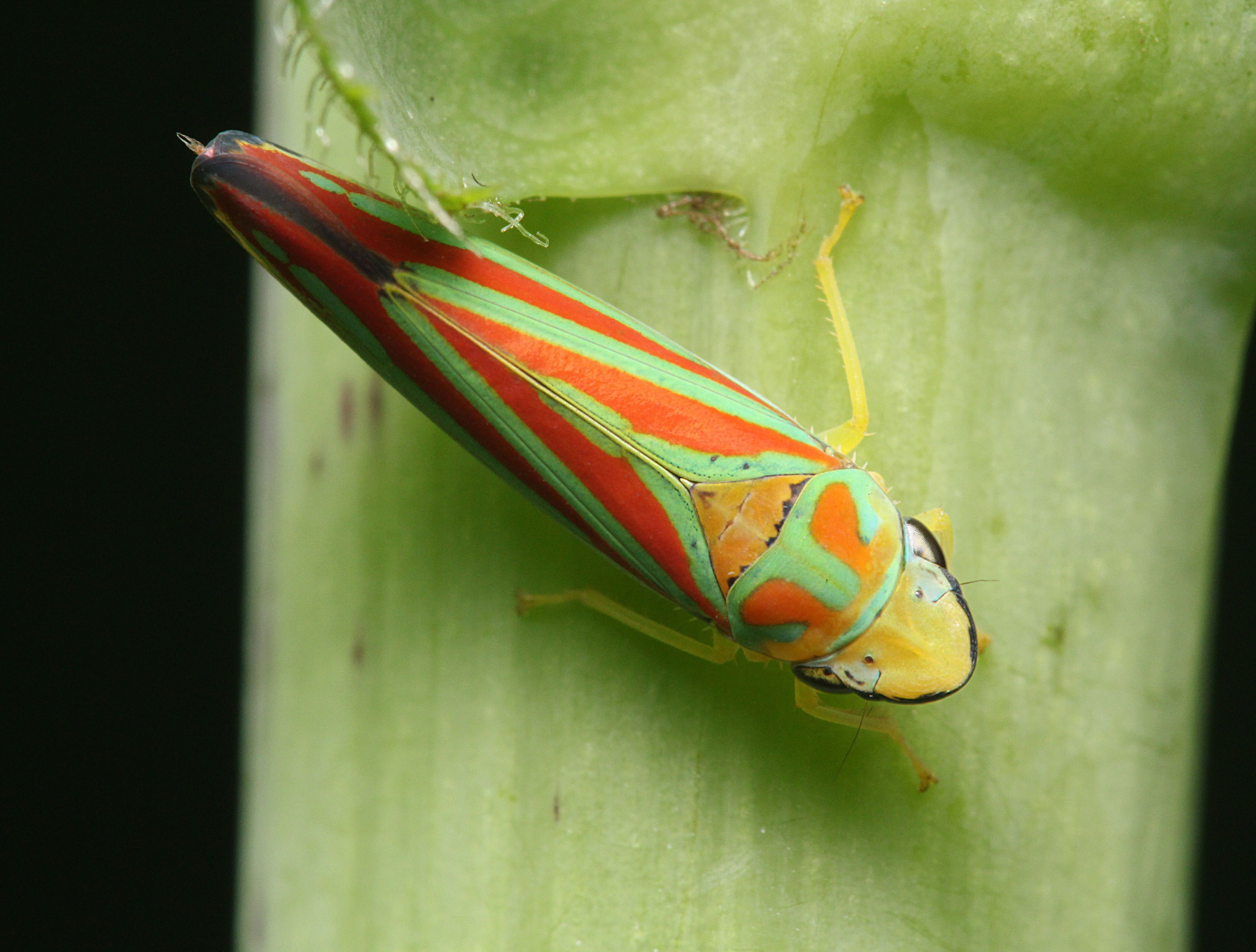 Leafhopper Free HD Wallpapers Image Backgrounds
