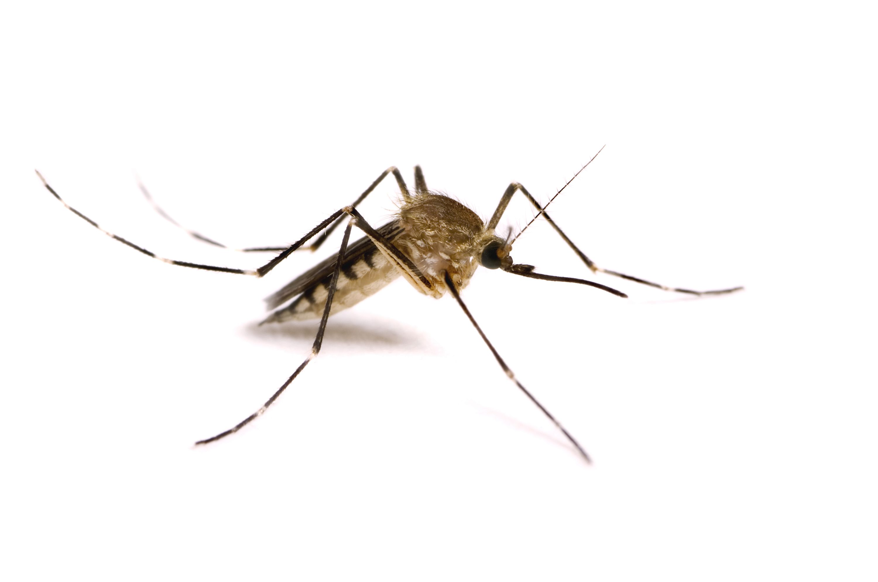700x400px Best Mosquito wallpapers 32