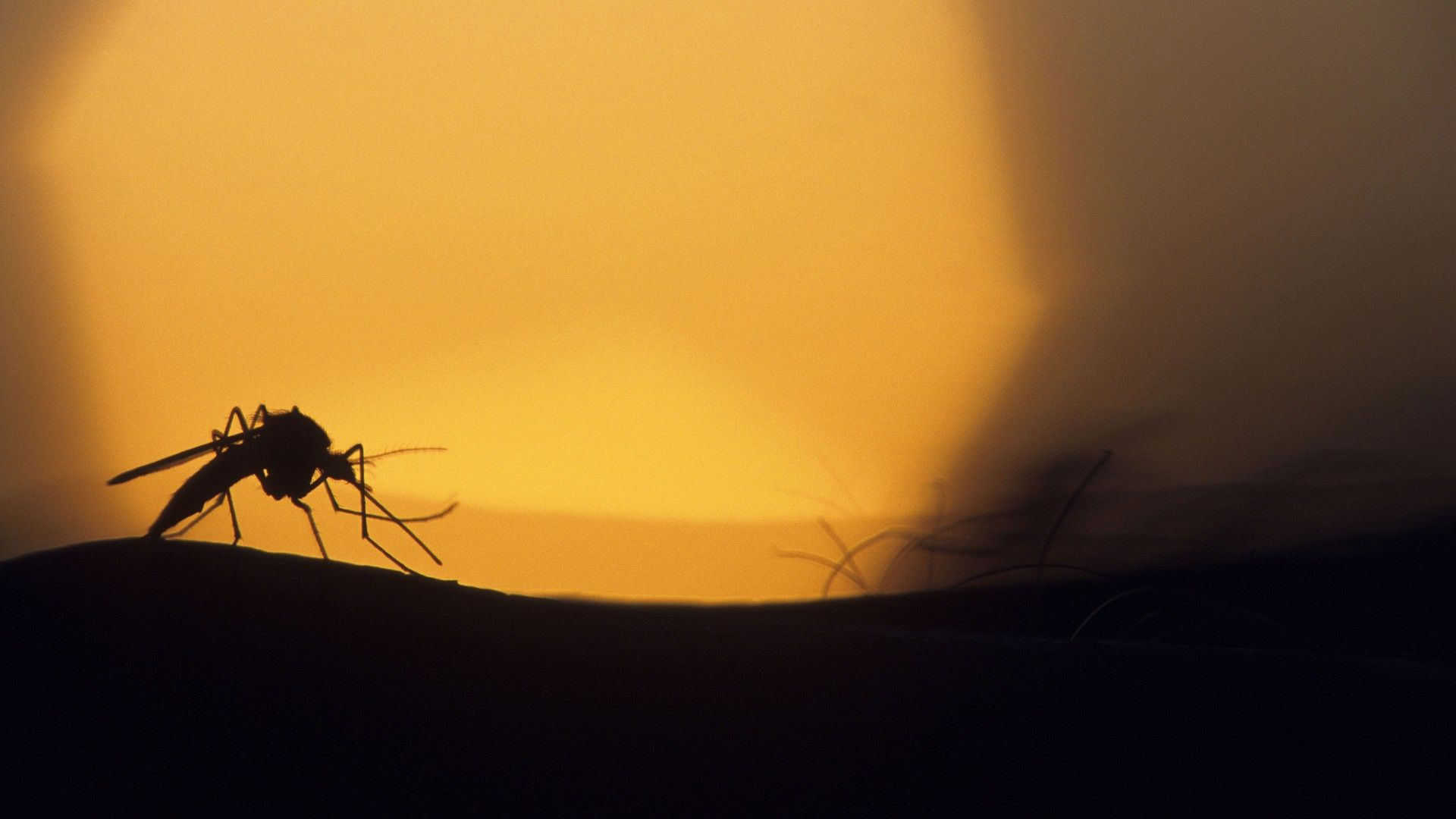 http://www.listofimage/wallpapers/2014/03/Mosquito