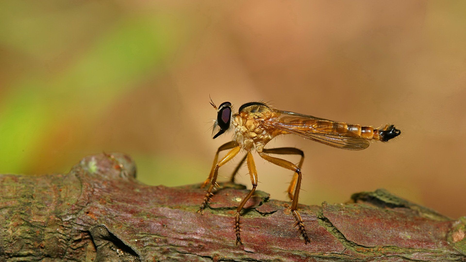 Insects fly mosquito wallpapers