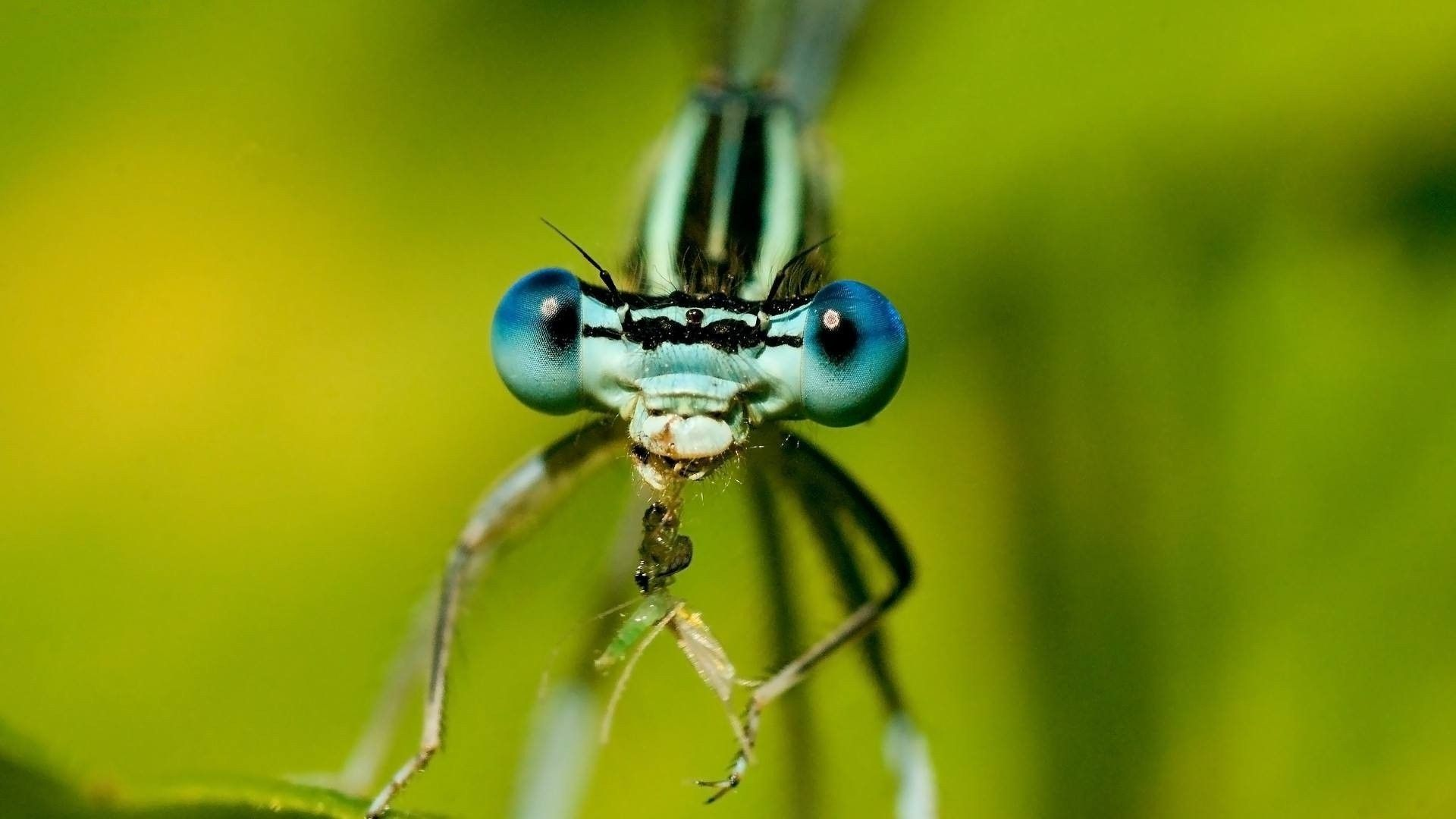 Insects HD Photos