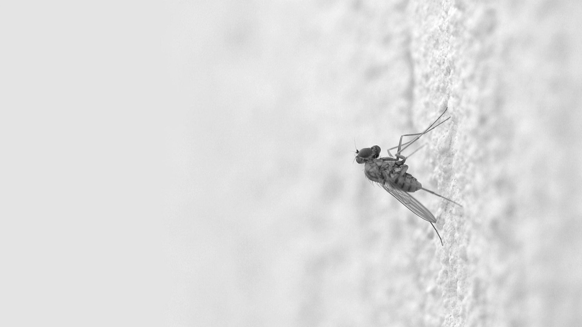 Download Wallpapers 1920x1080 Mosquito, Insect, Surface, Creep