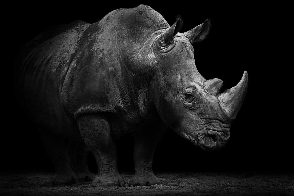 Architects Paper Photo wallpapers «Rhino» 470509