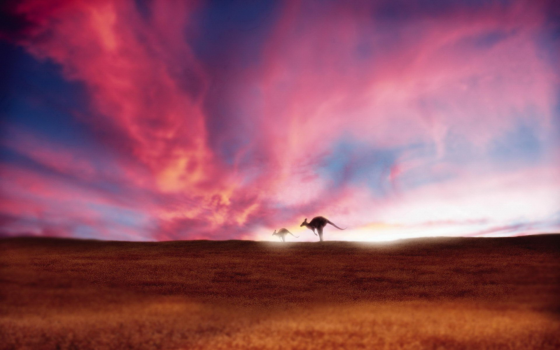 Free Download Bright Wallpapers, 26 Kangaroo 100% Quality HD Wallpapers