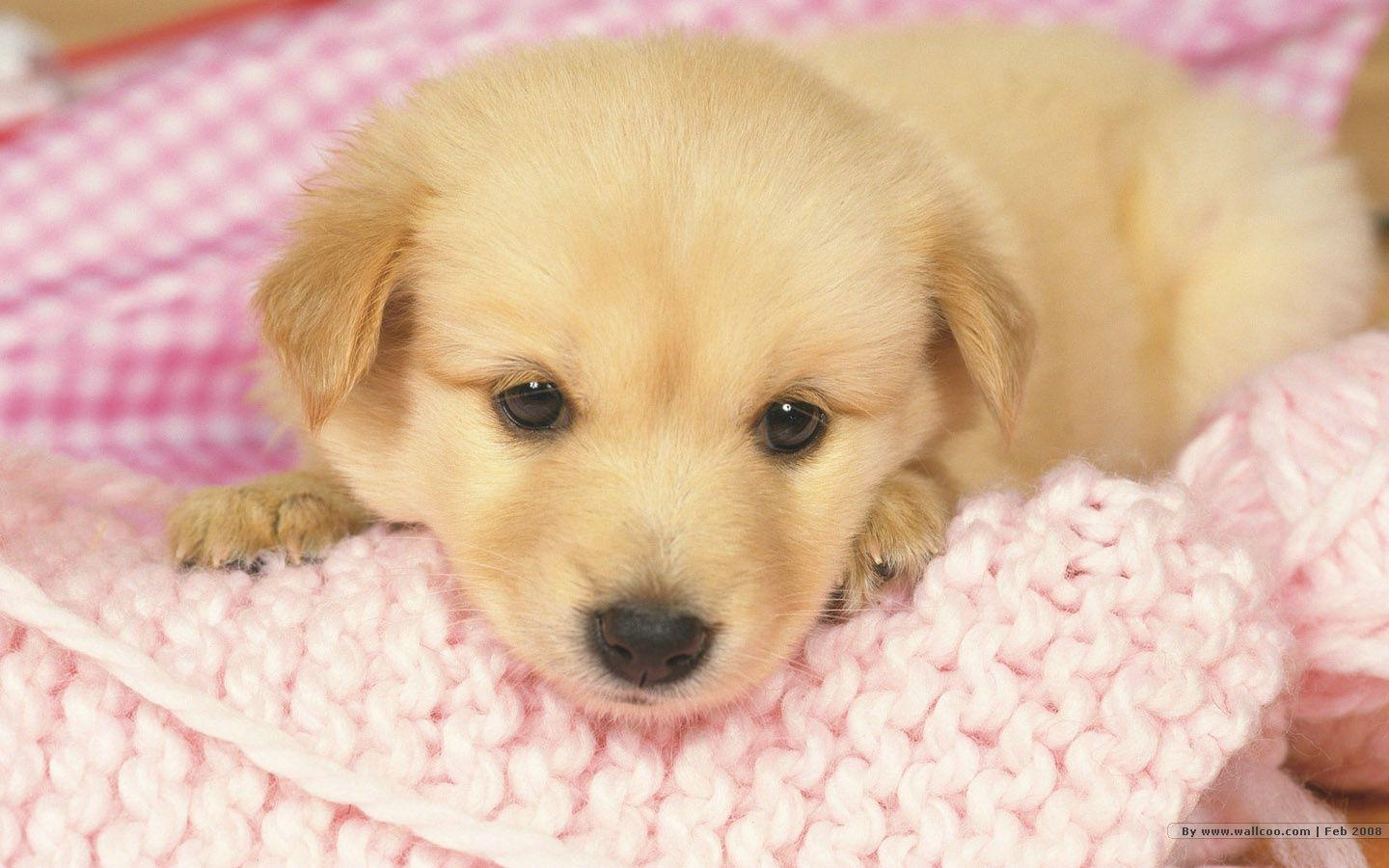 Puppies Wallpapers Free Download Group