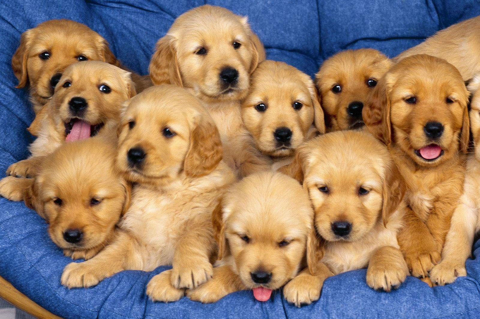 Hd Wallpapers Puppies