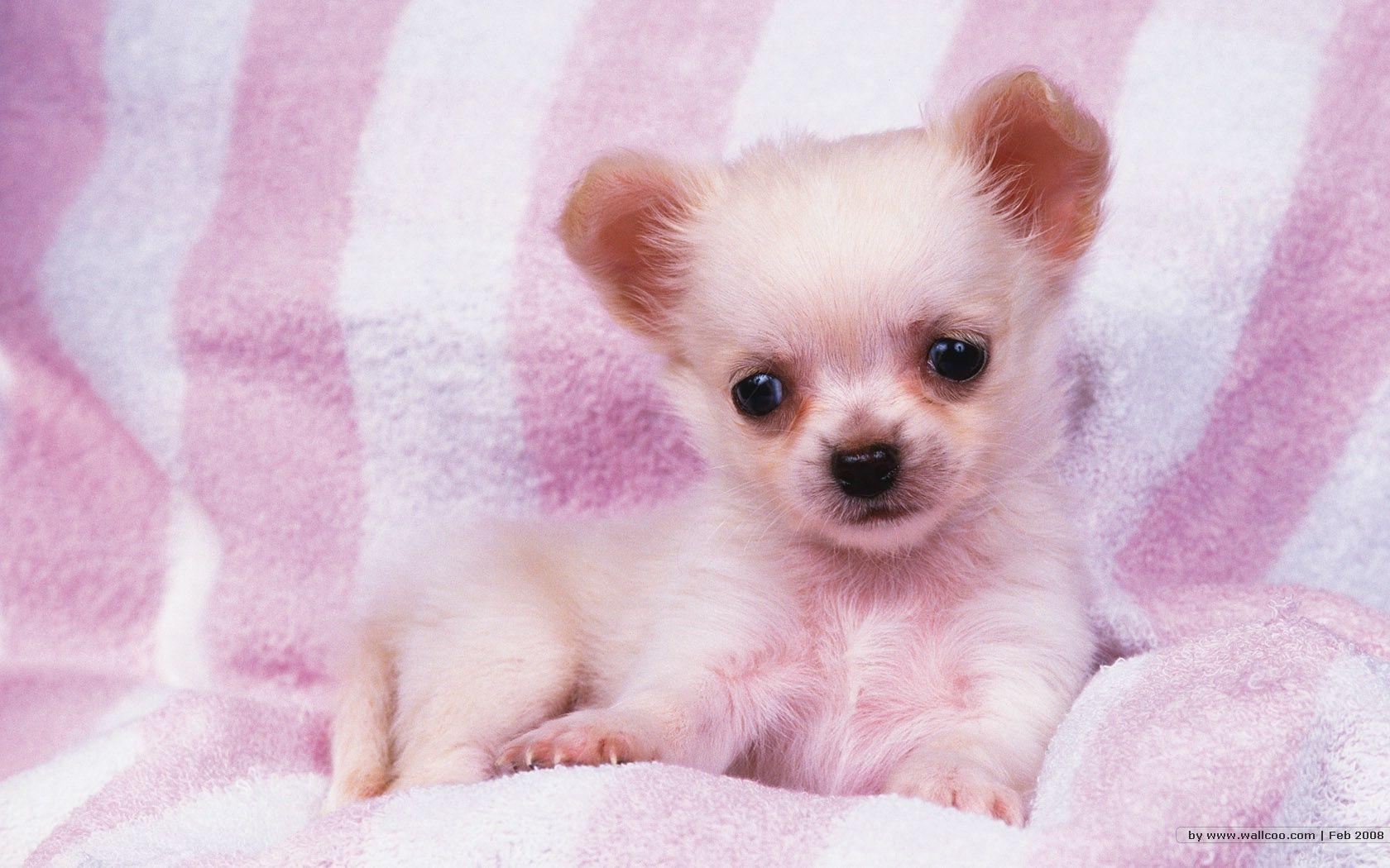 41 units of Puppy Wallpapers