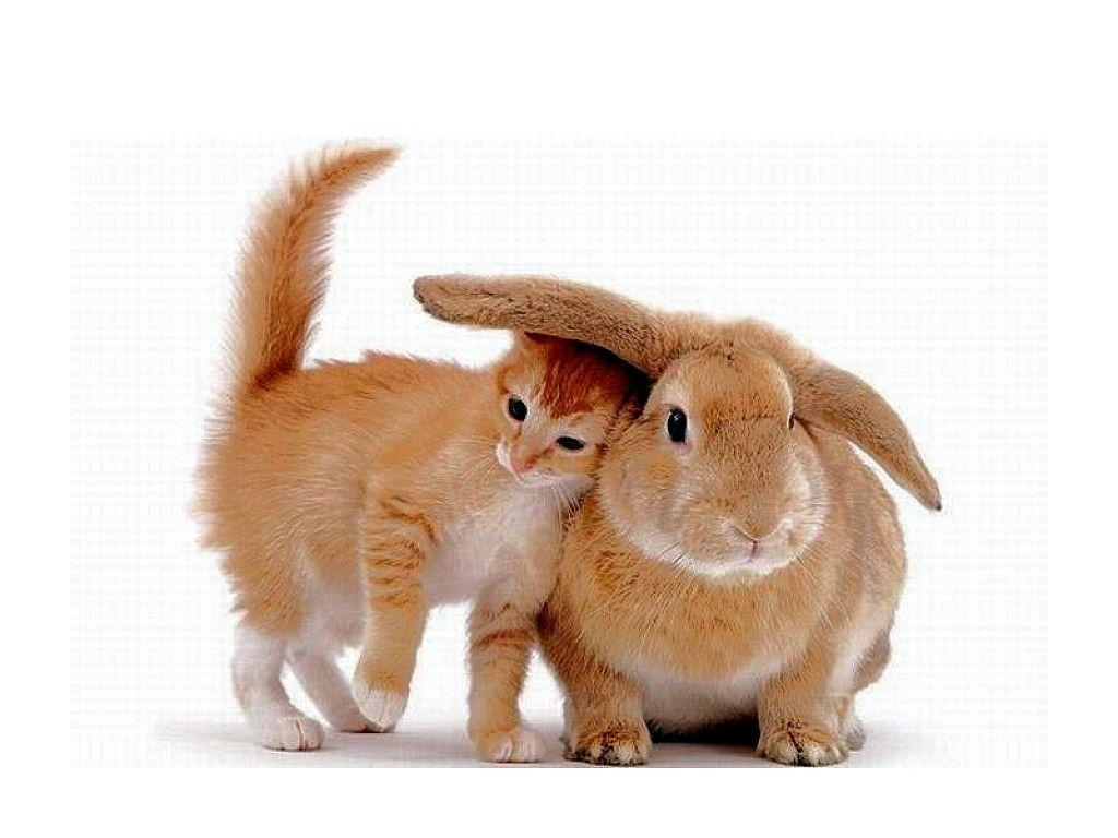 Brown Cat And Rabbit Wallpapers Wallpapers