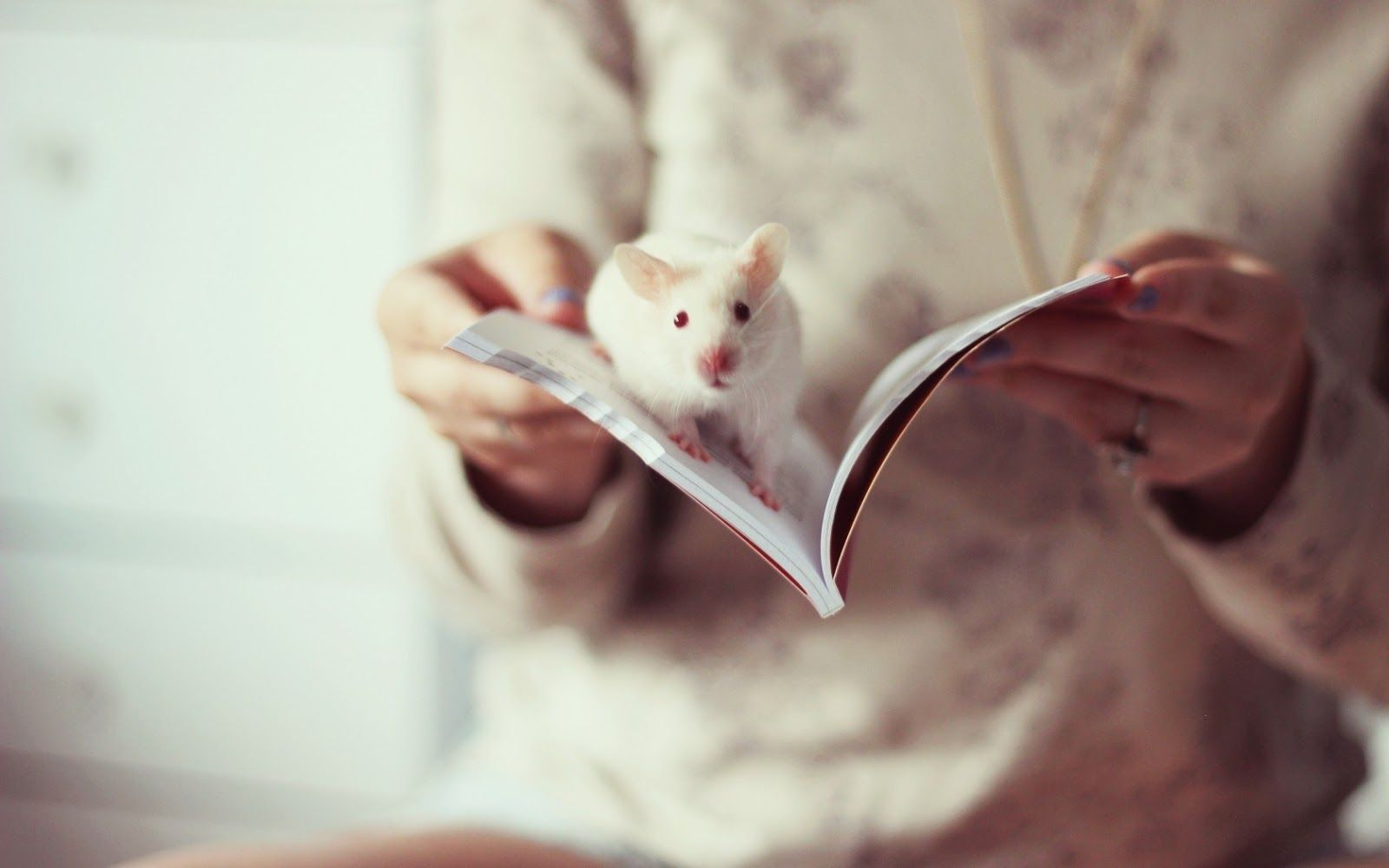 White Rat Wallpapers, Image, Photos, Pictures & Pics