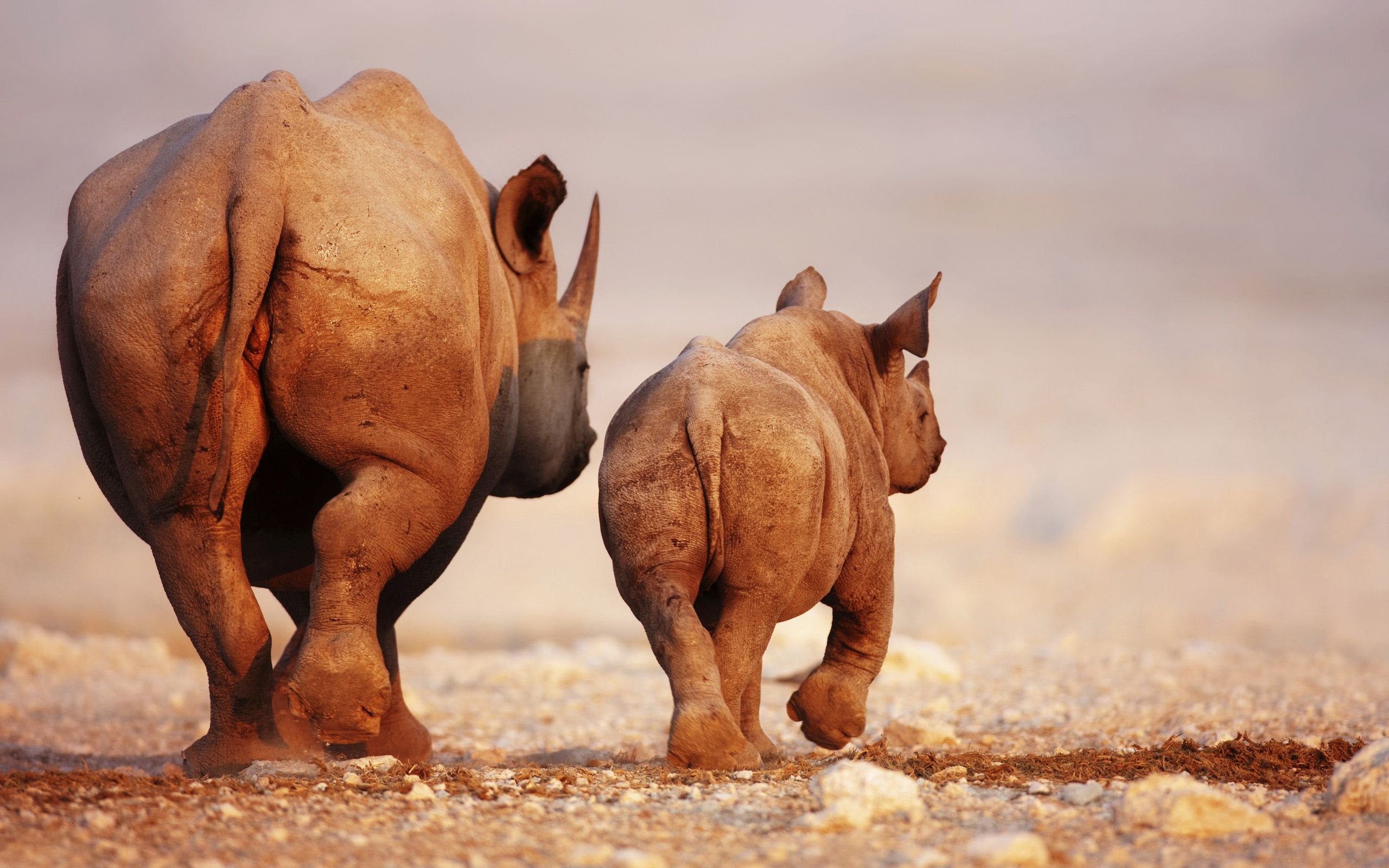 Awesome Rhino wallpapers