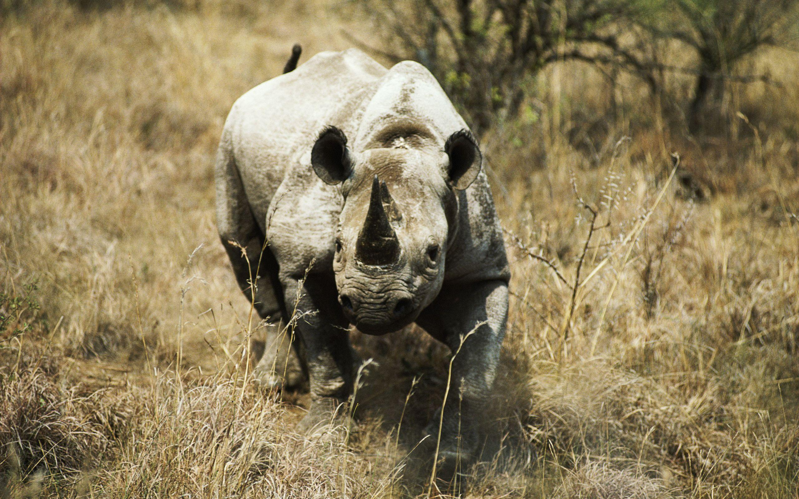 Rhino Full HD Wallpapers and Backgrounds