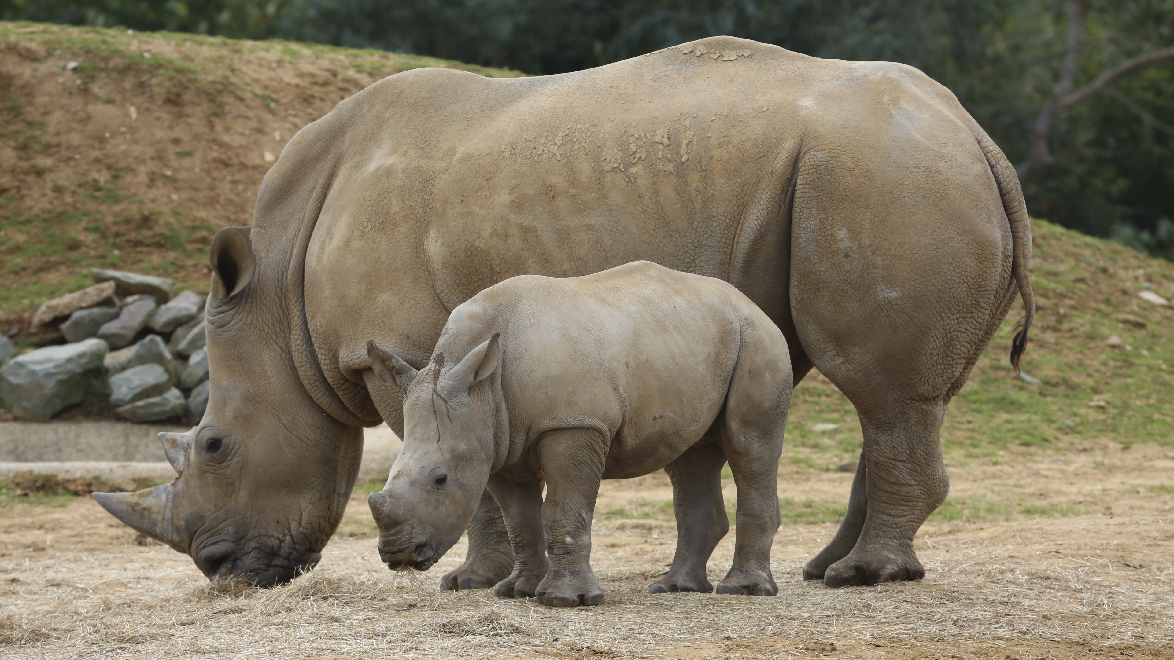 Rhinoceros Family Widescreen Wallpapers 49321 3840x2160 px
