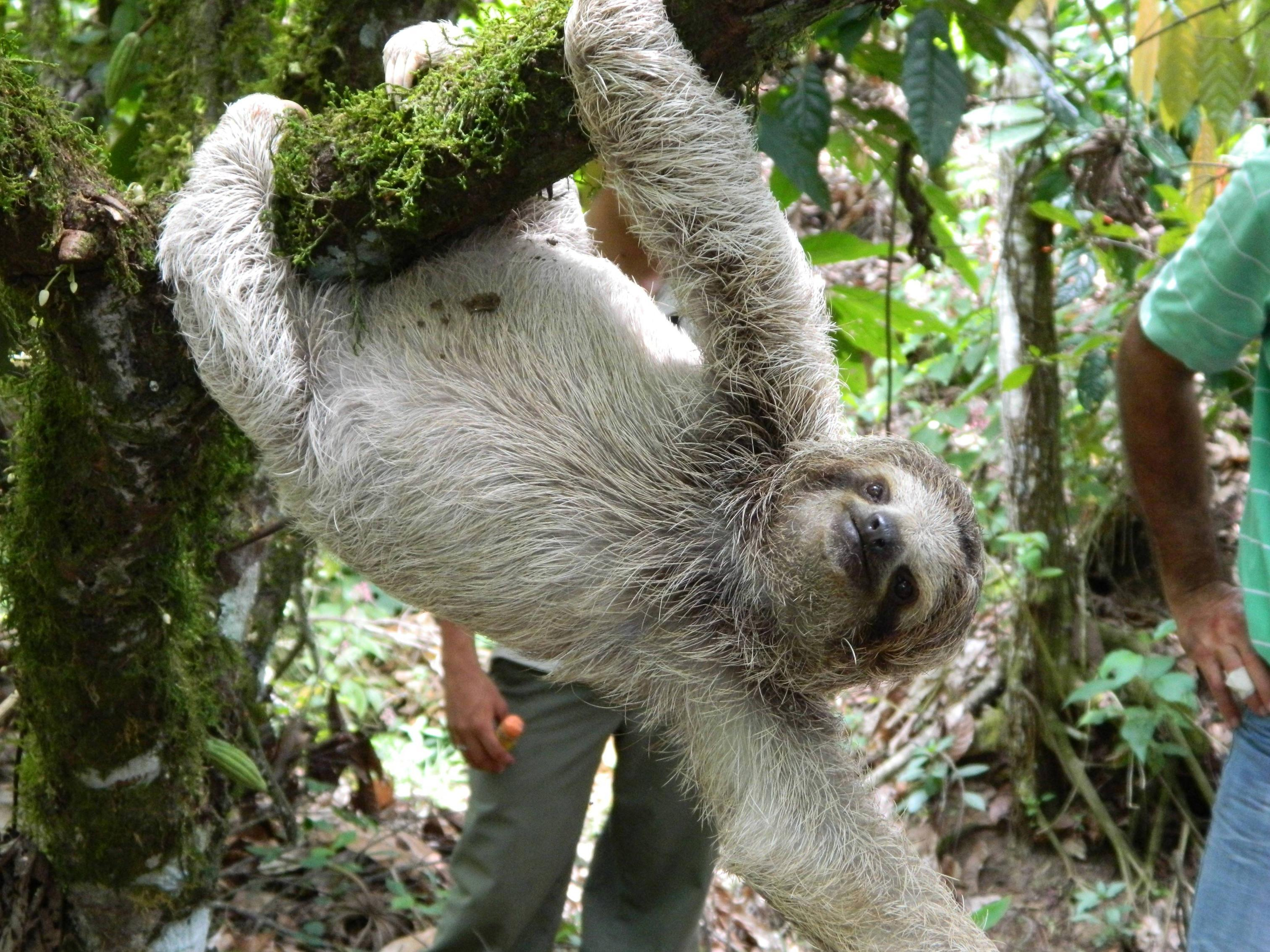 Sloth 2679×2304 Wallpapers 1638105