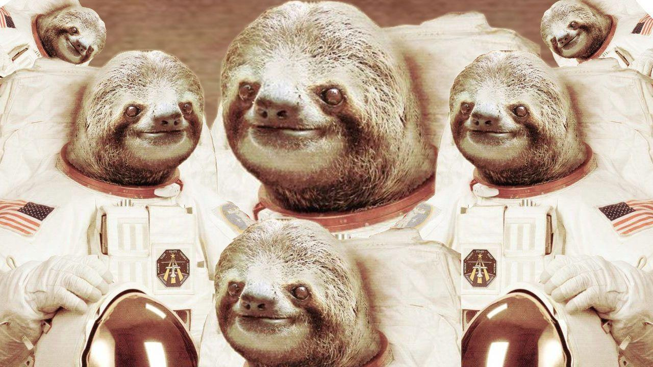 Animals For > Sloth In Space Wallpapers