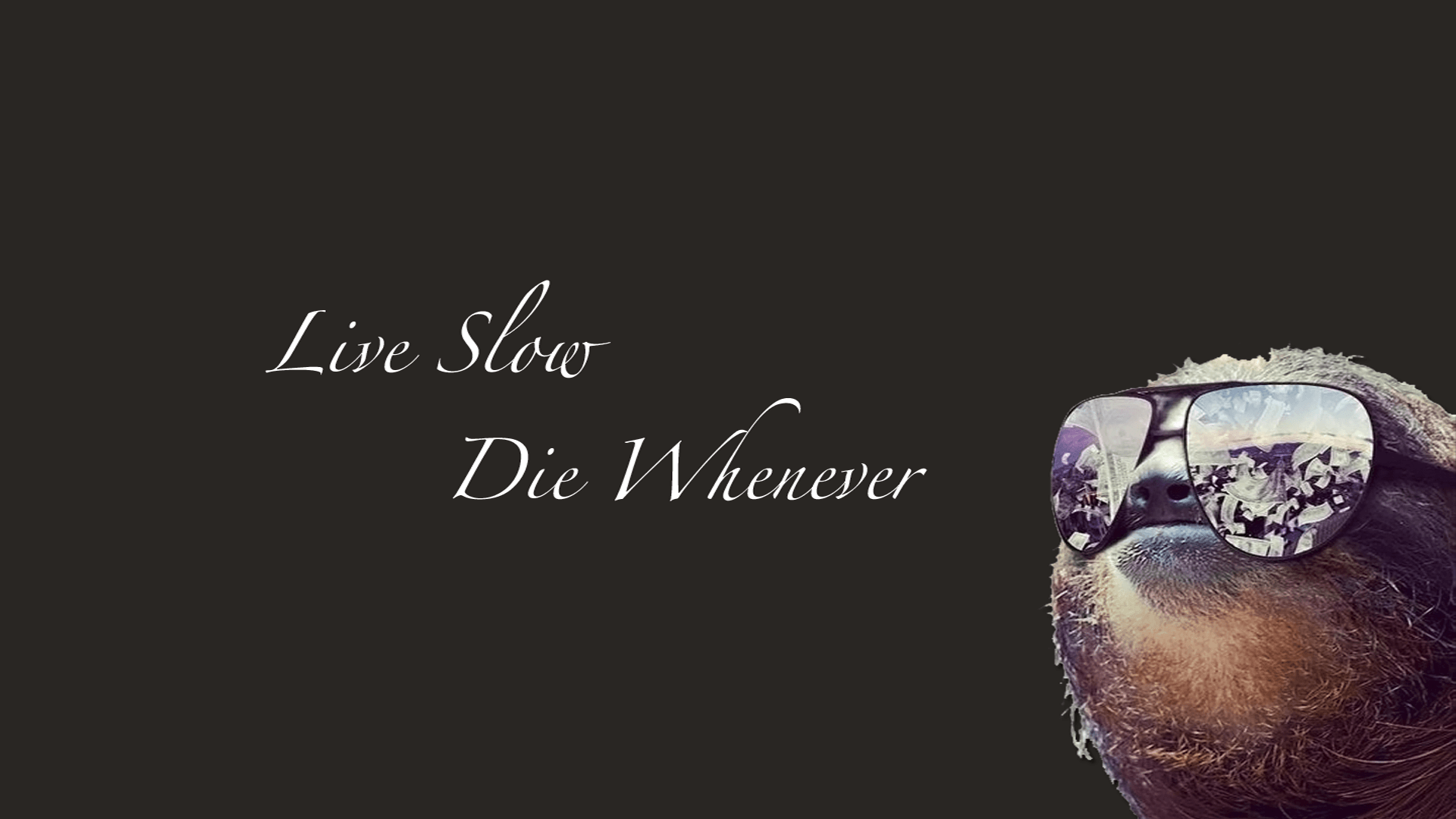 All of those other sloth wallpapers are too busy. : wallpapers