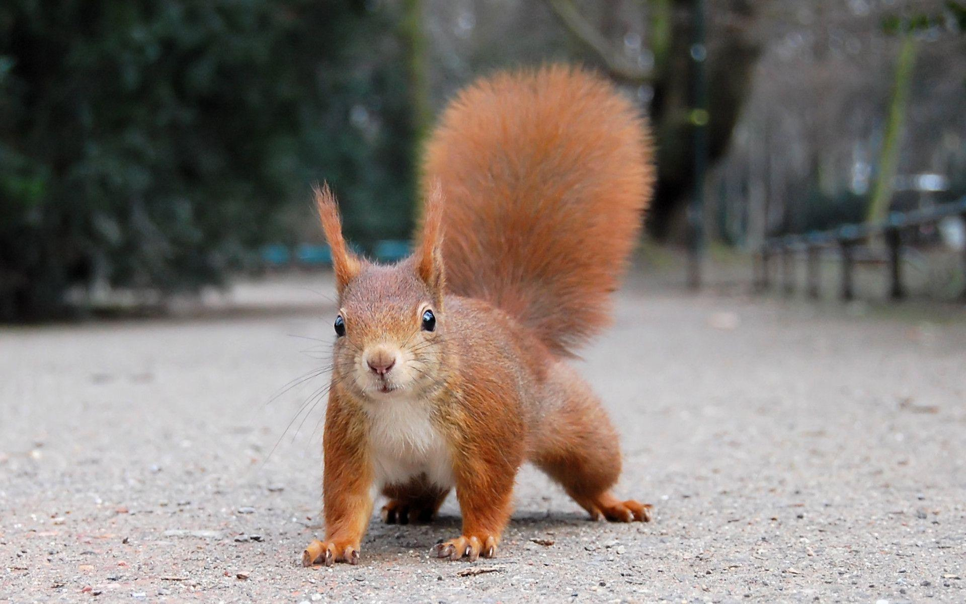 Funny Squirrel Wallpapers 39782 in Animals