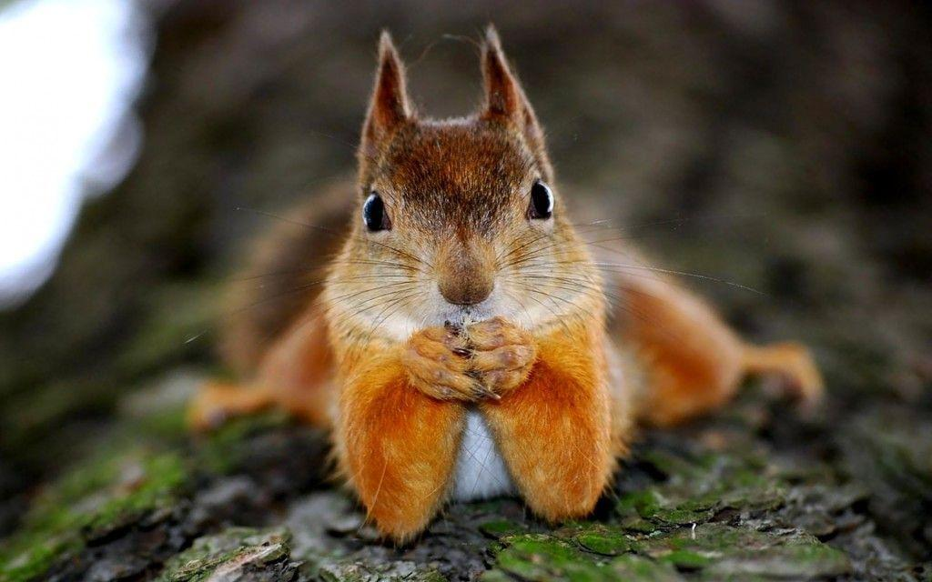 Cute Squirrel Wallpapers