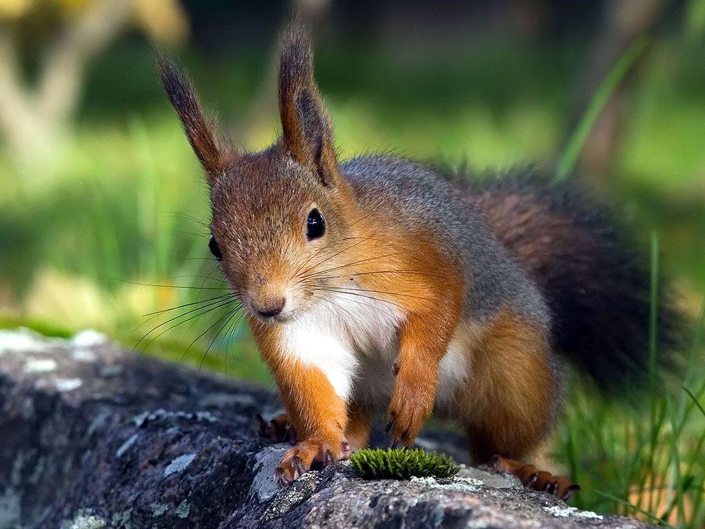 Cute Squirrel HD Wallpapers