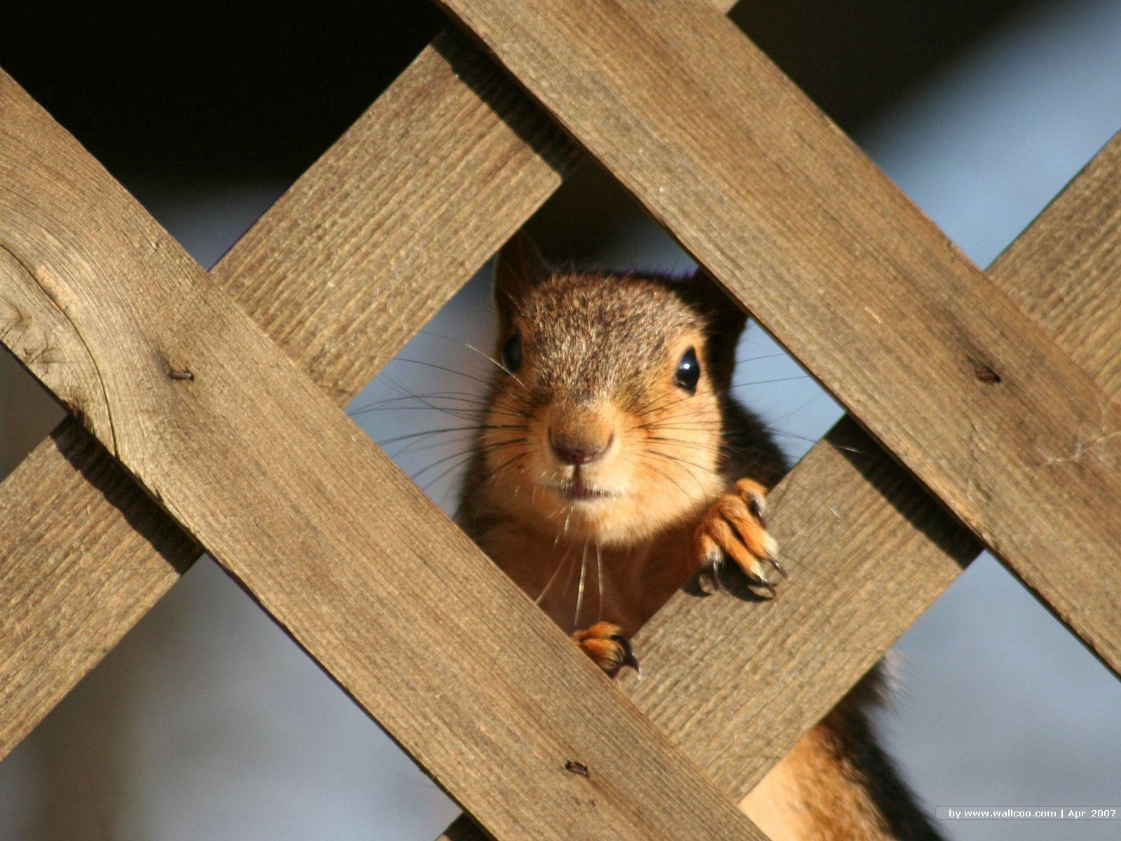 Squirrel Wallpapers 39776 in Animals