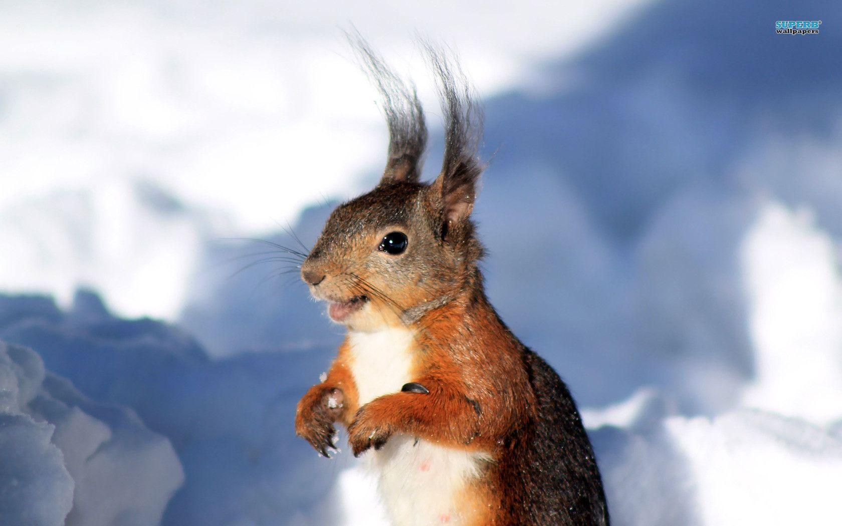Wallpapers For > Fall Wallpapers With Squirrel
