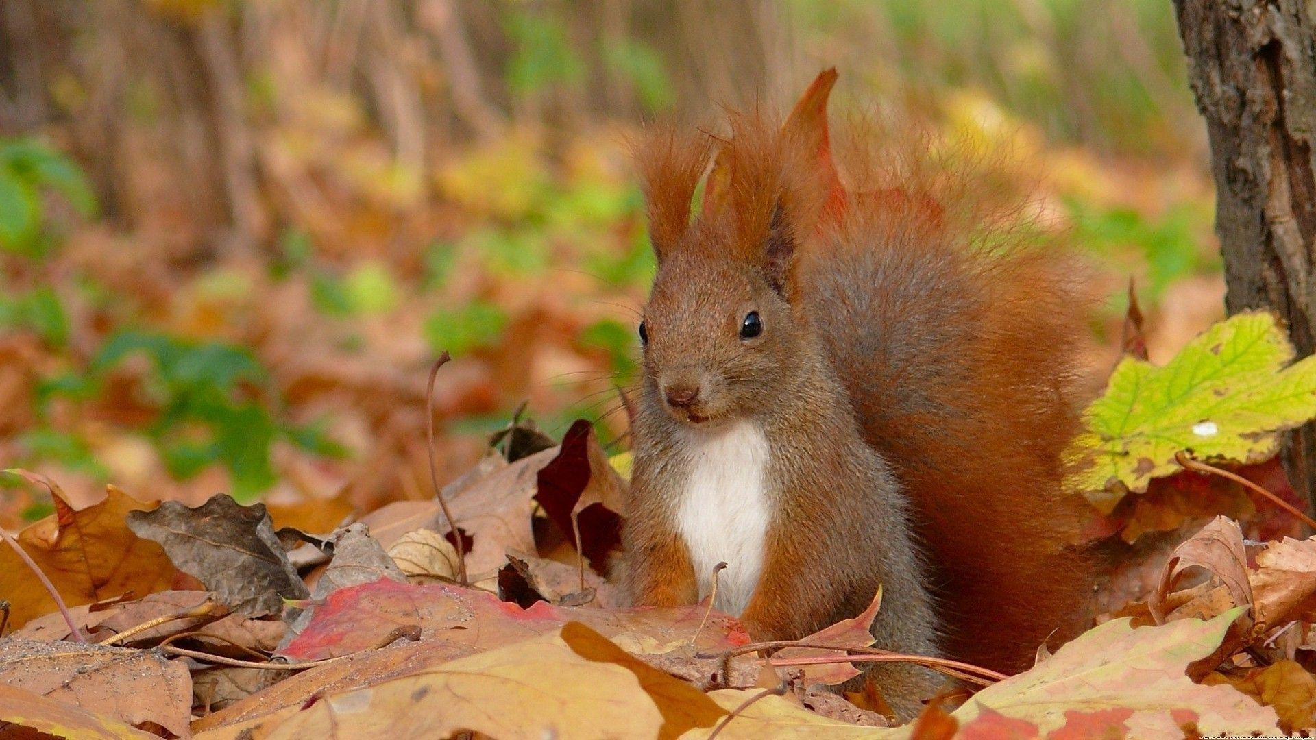 Squirrel Wallpapers #