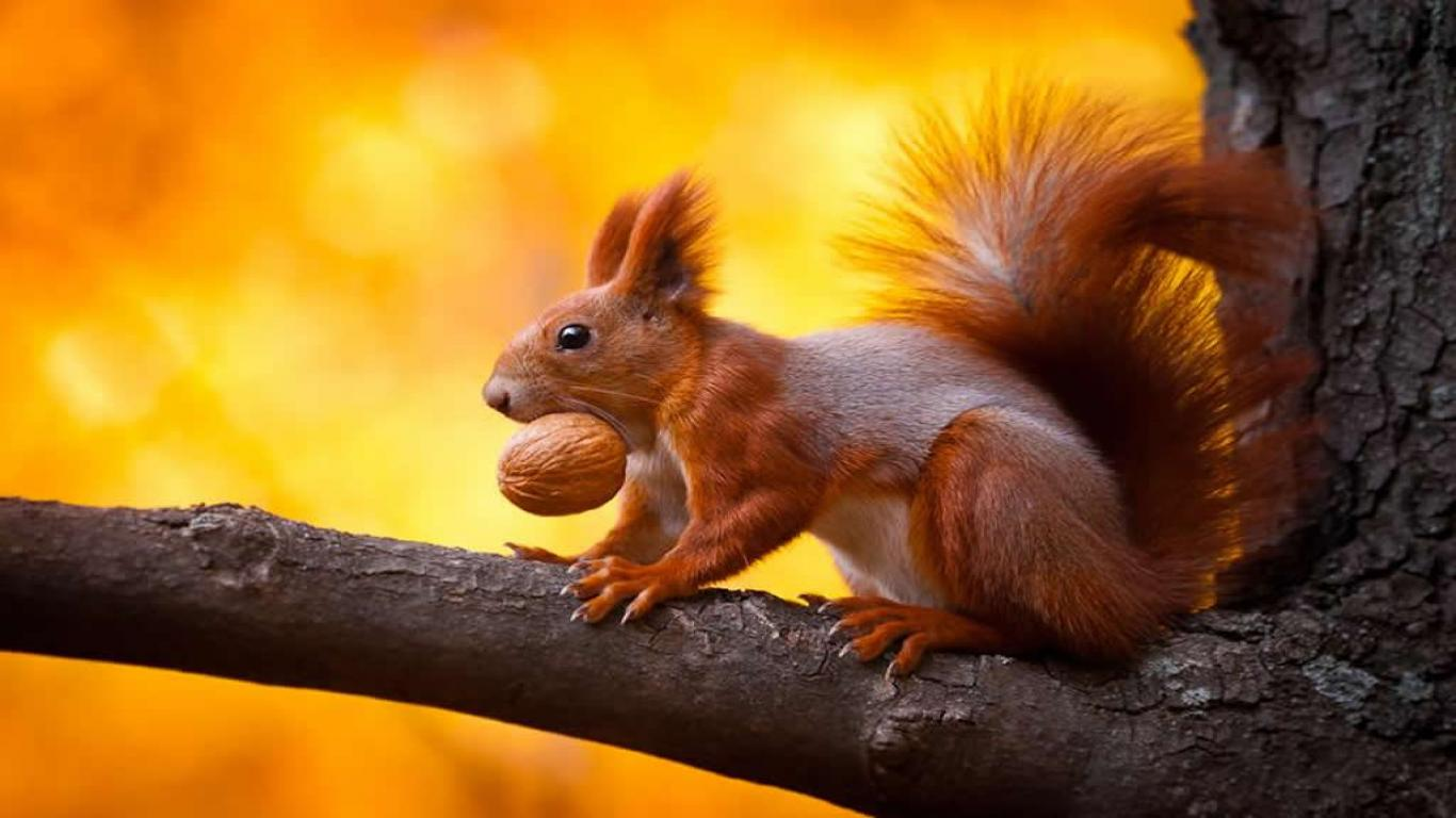 Memes For > Funny Squirrel Wallpapers