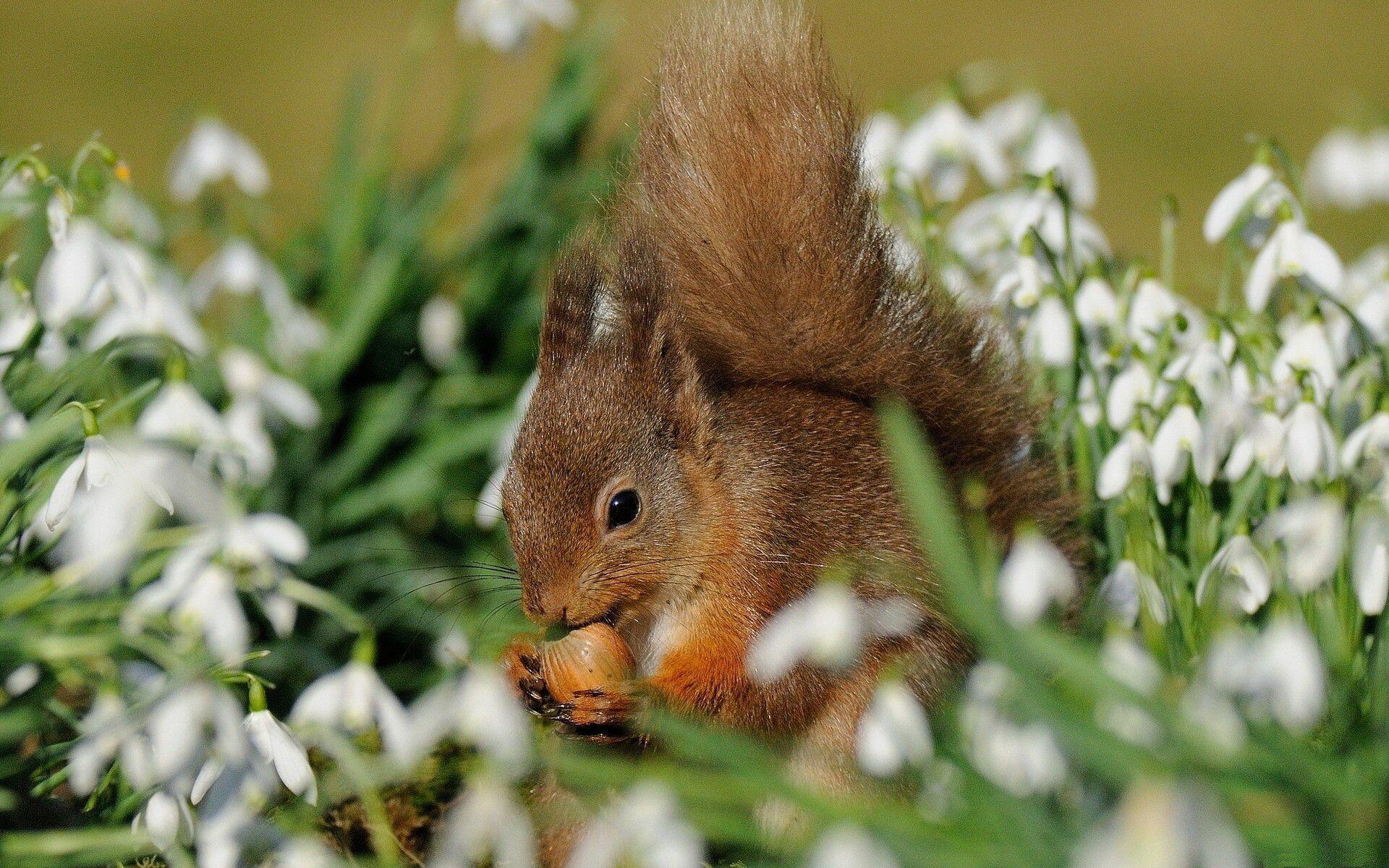 476 Squirrel Wallpapers