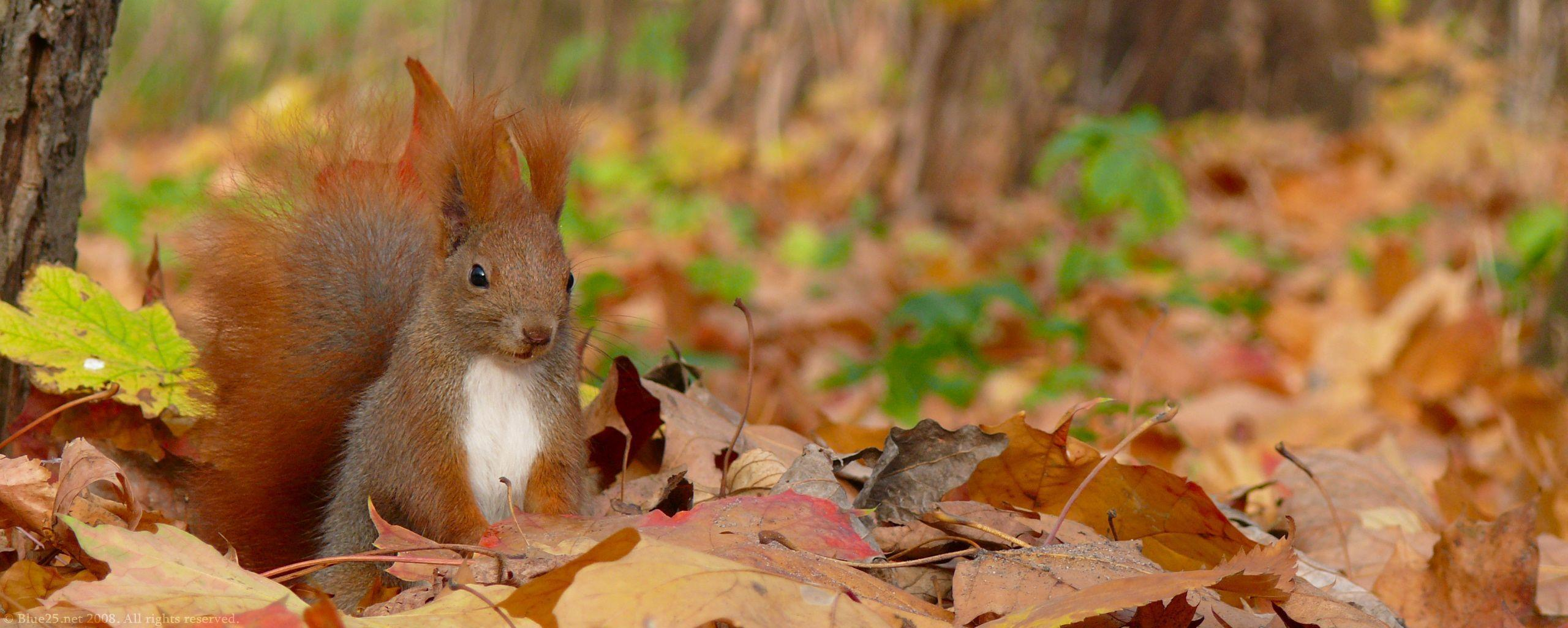 Squirrel Animal Wallpapers 3351 Image HD Wallpapers