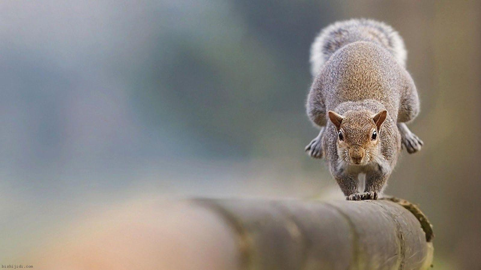 Your Wallpaper: Squirrel Wallpapers