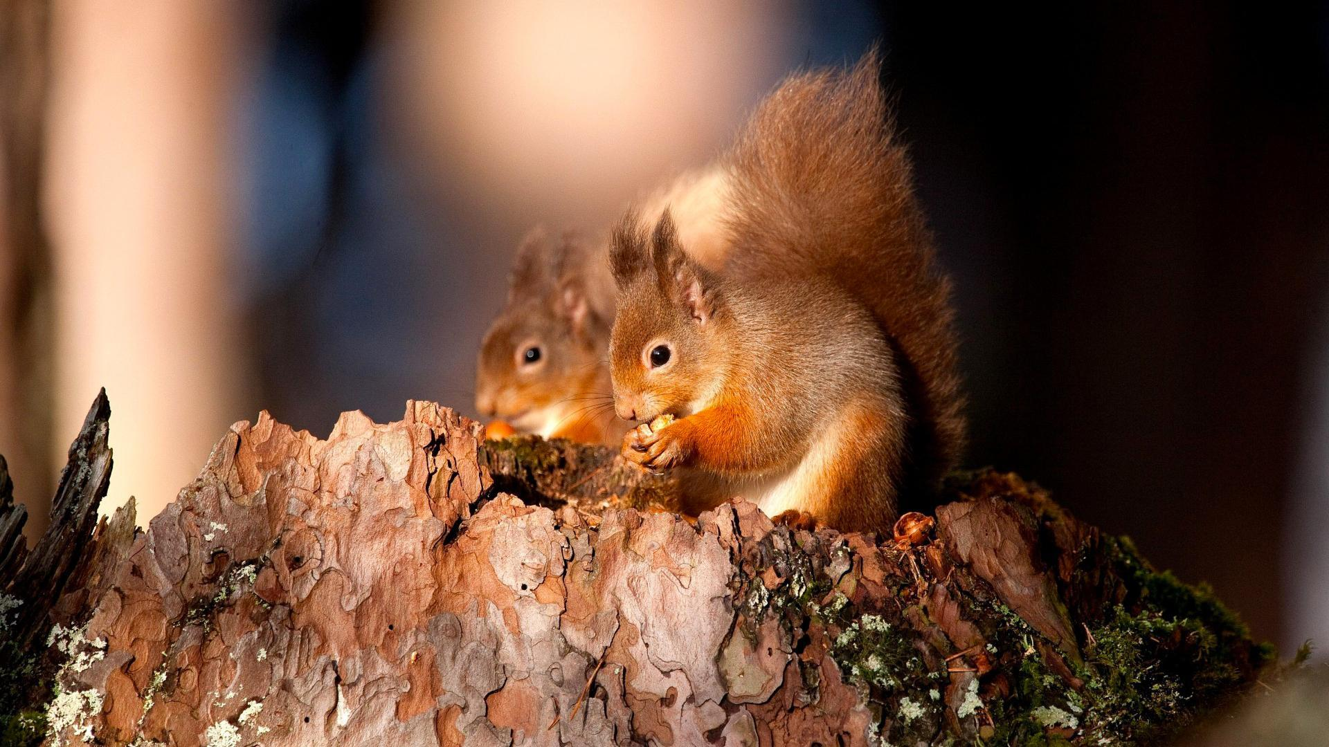 Squirrel Wallpapers 34487 1920x1080 px ~ HDWallSource