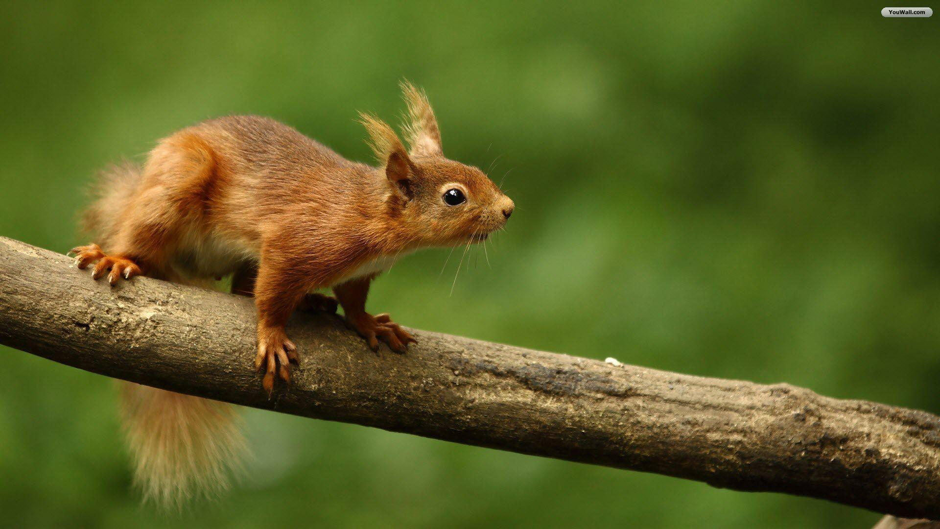 Animals For > Cute Squirrel Wallpapers Hd