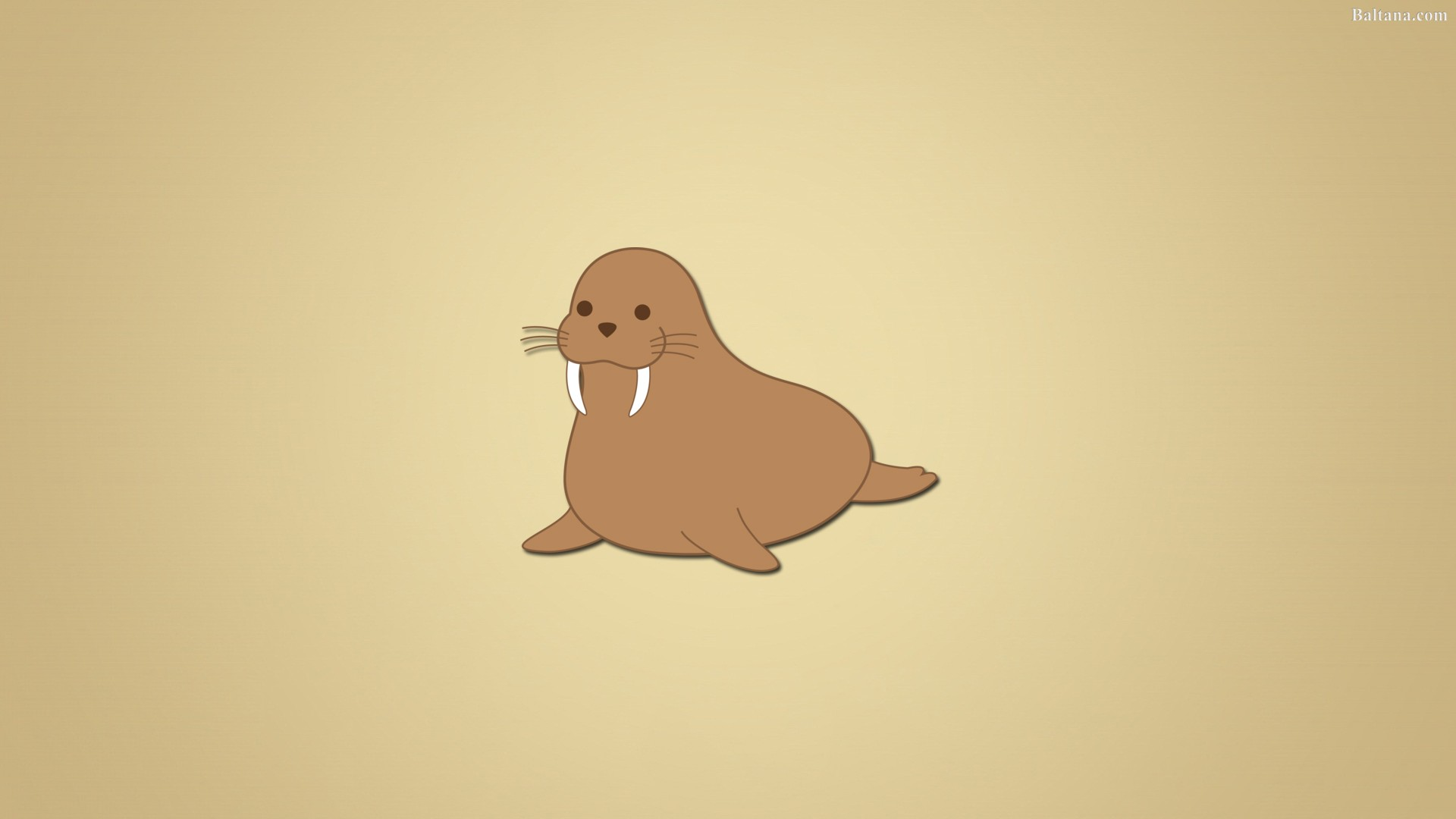 8 Walrus Wallpapers HD Backgrounds Free Download