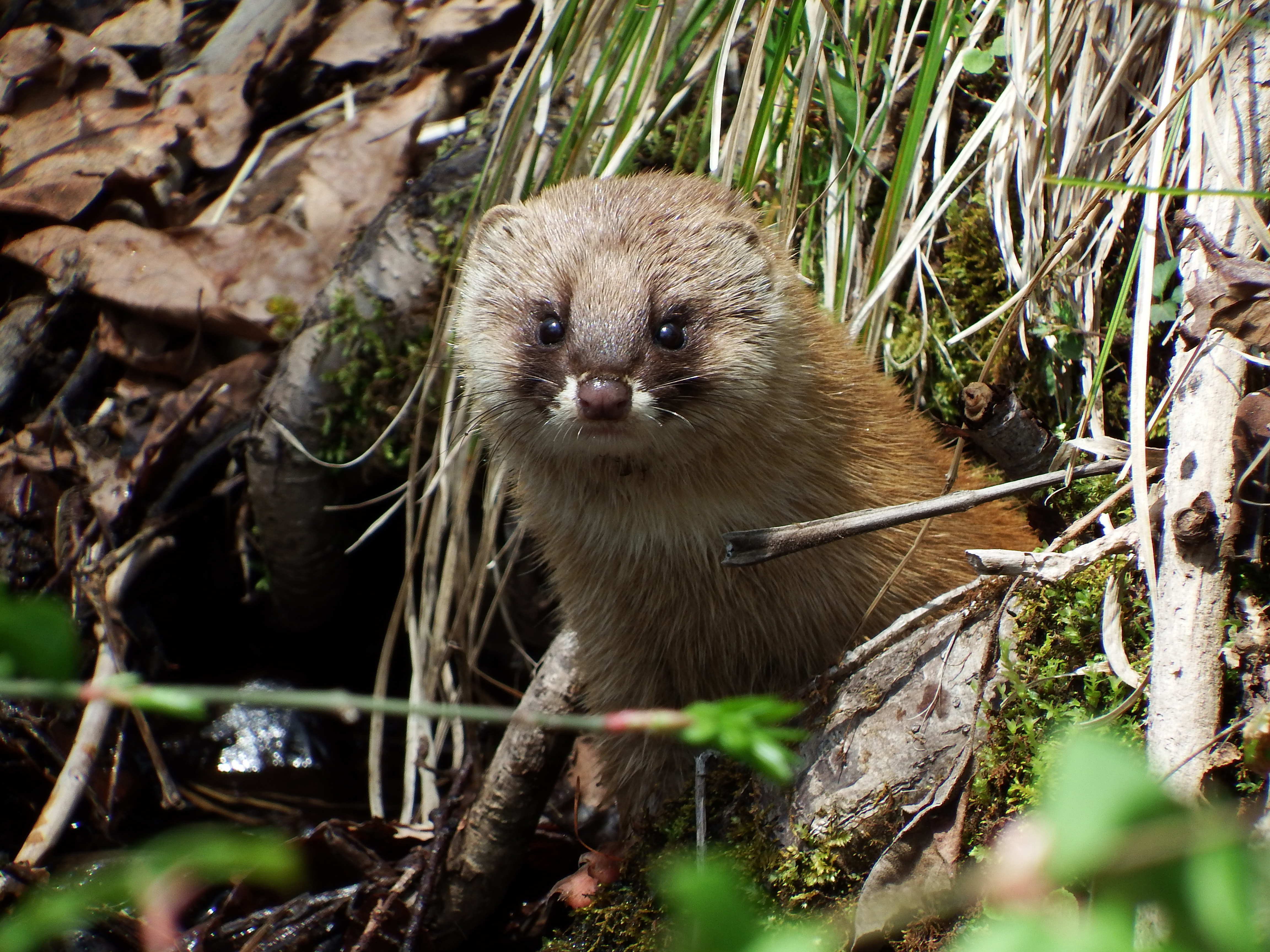 What's 'weasely' about wonderful weasels?