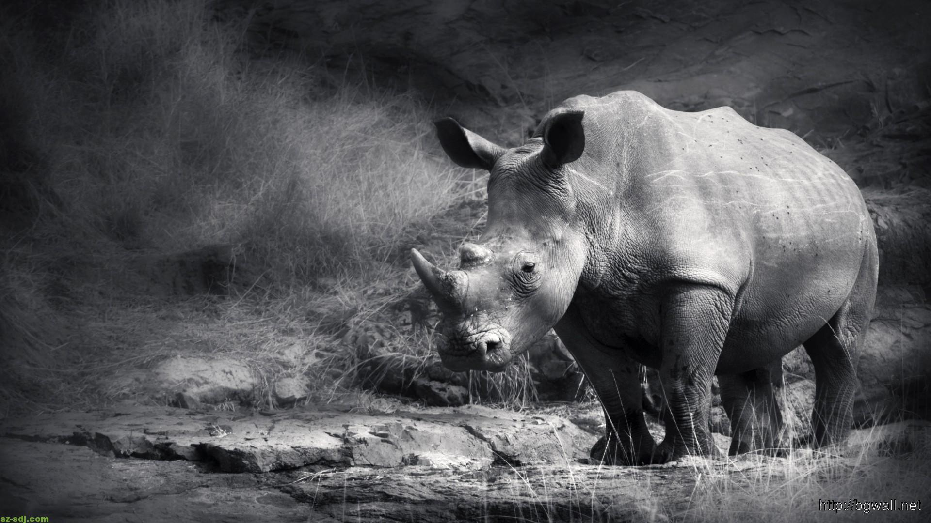 Black And White Rhino Wallpapers – Backgrounds Wallpapers HD