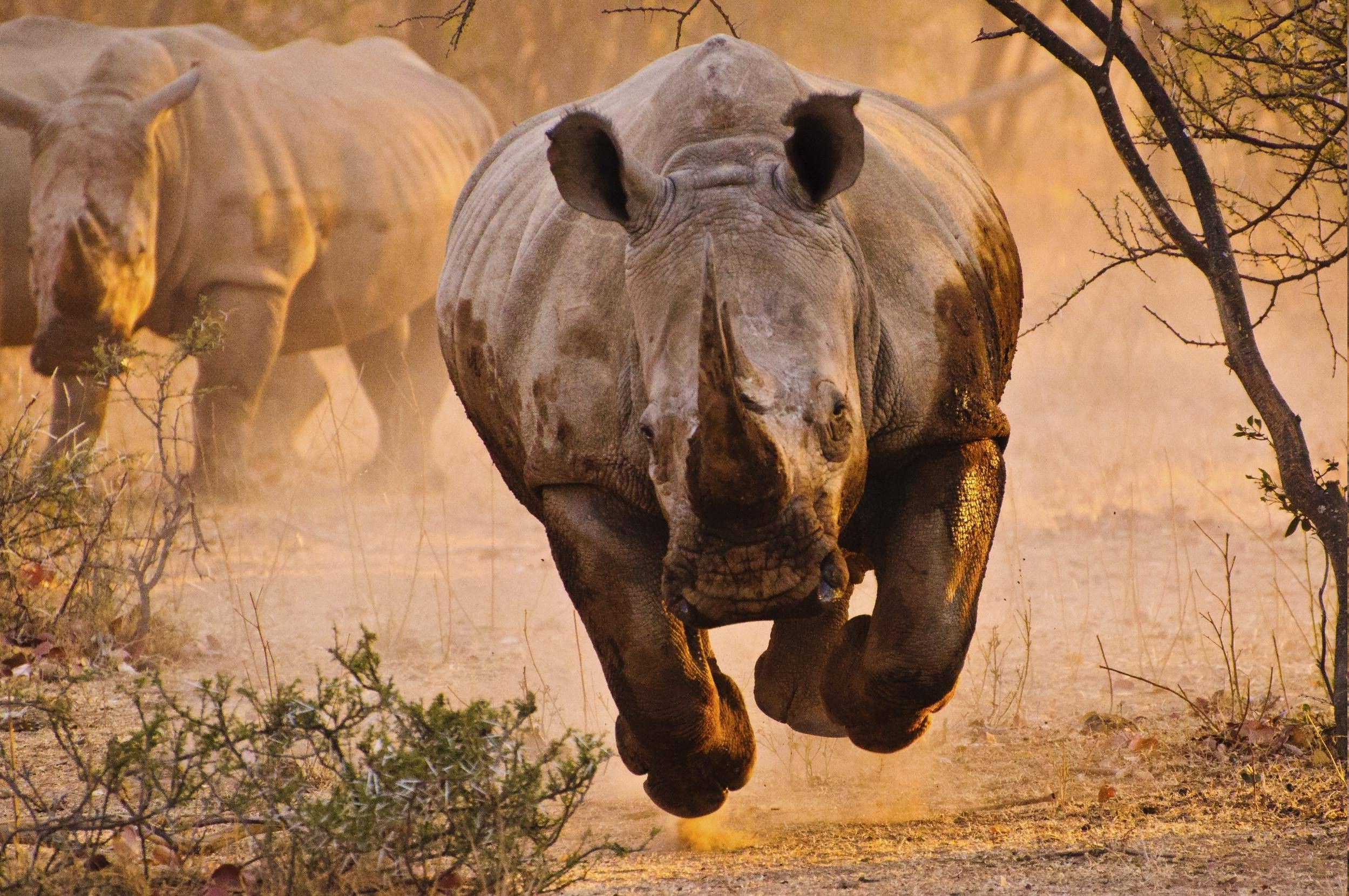 rhino, Nature, Animals Wallpapers HD / Desktop and Mobile